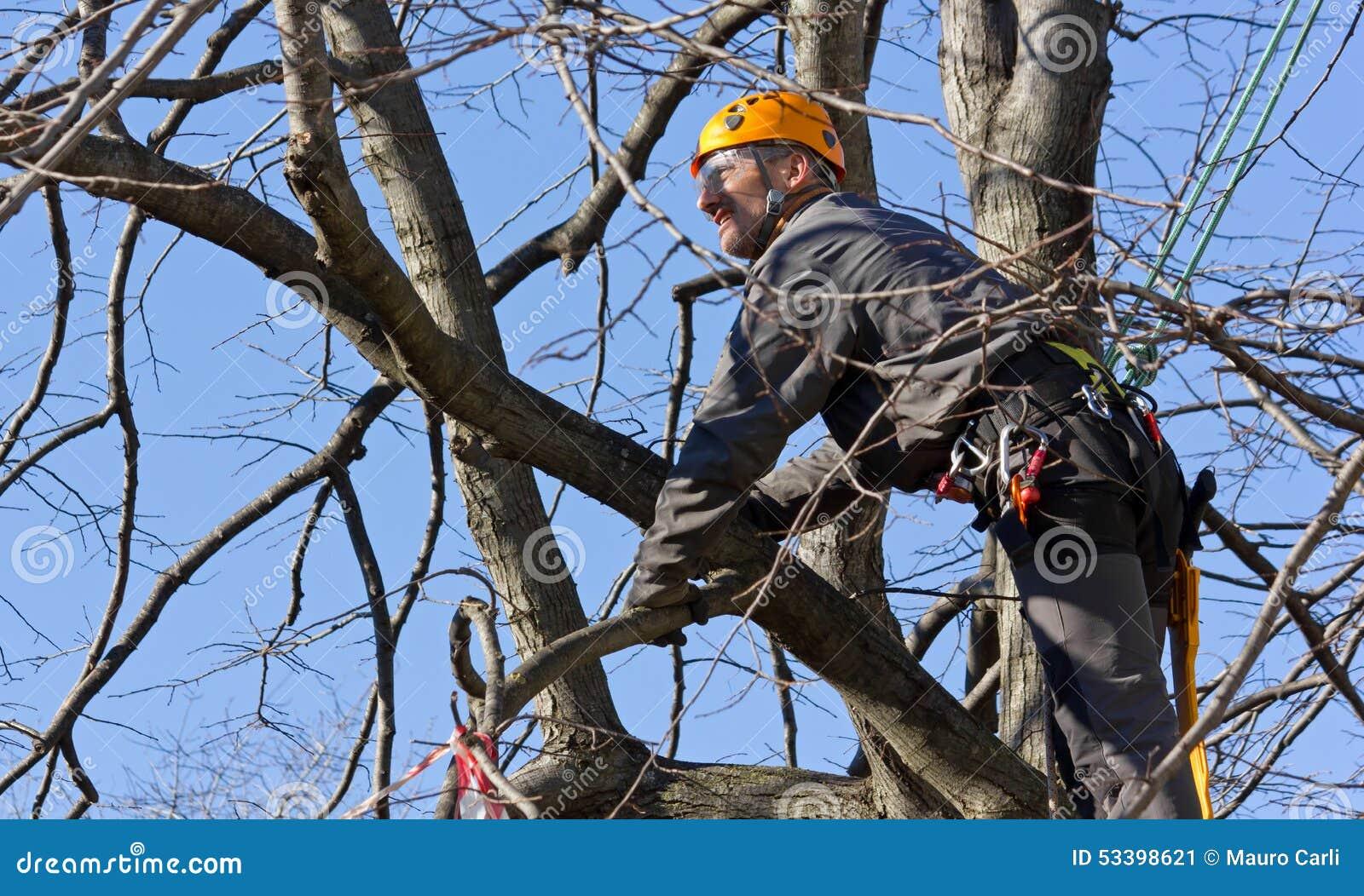 Haken Van Takken : De wildplukker stapel op stapelen zwevende takkenril