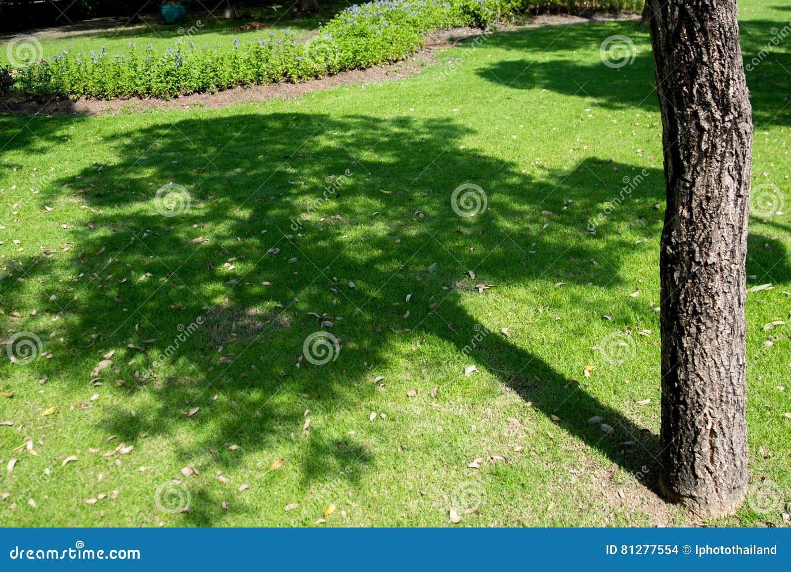 Gras In Tuin : Man het maaien van het gras tuin geen camerabeweging u stockvideo