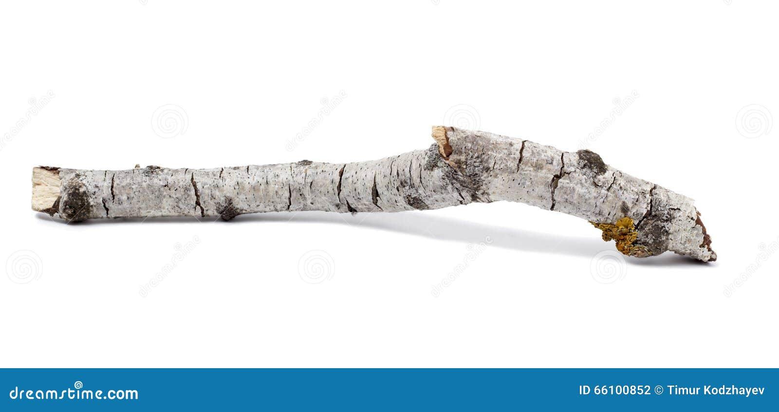 Boomstam of tak van een berk