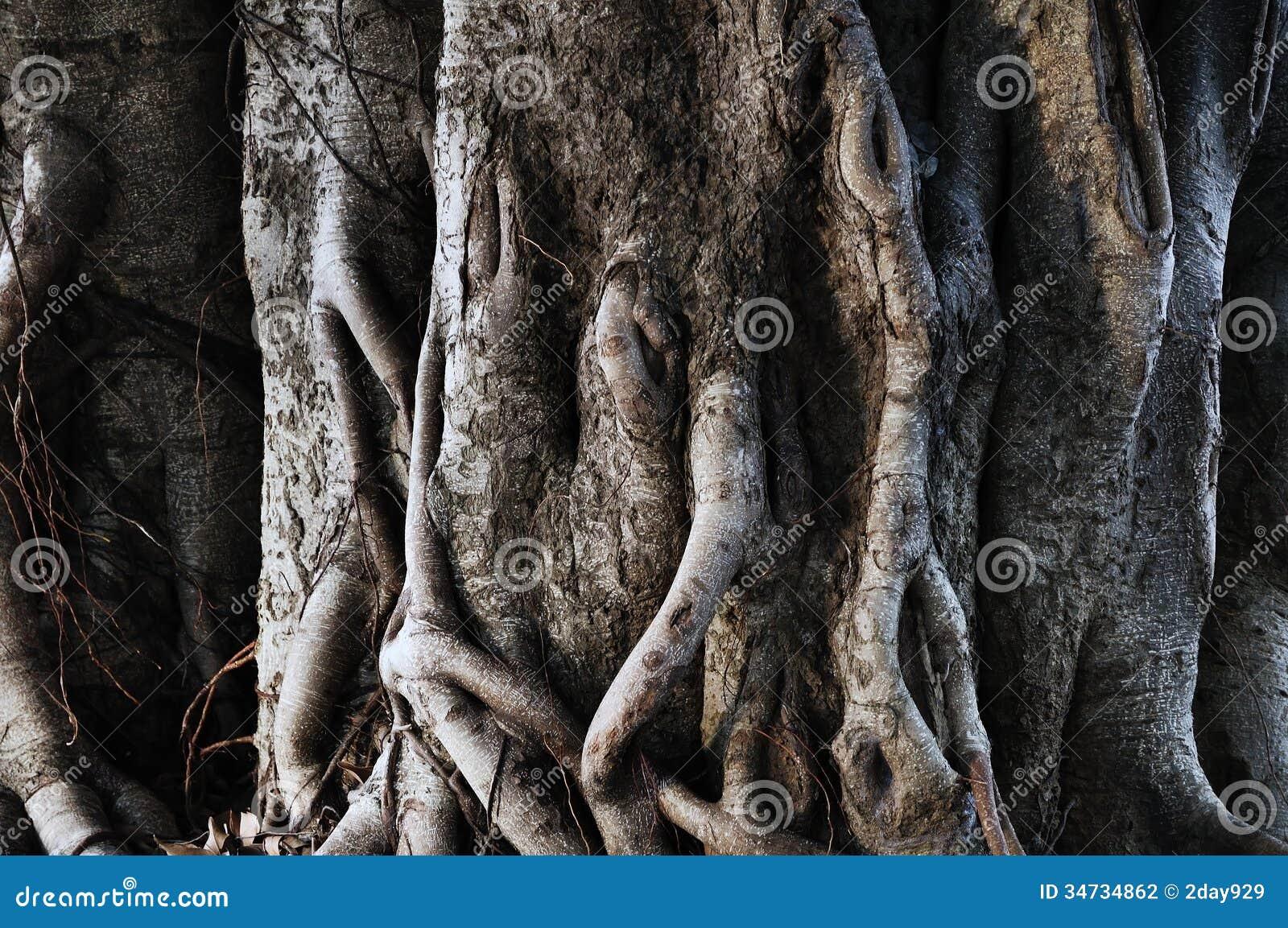 Boomstam van boom