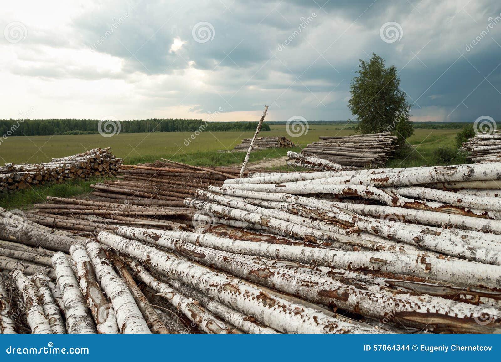 Boomstammen van bomenbesnoeiing en gestapeld