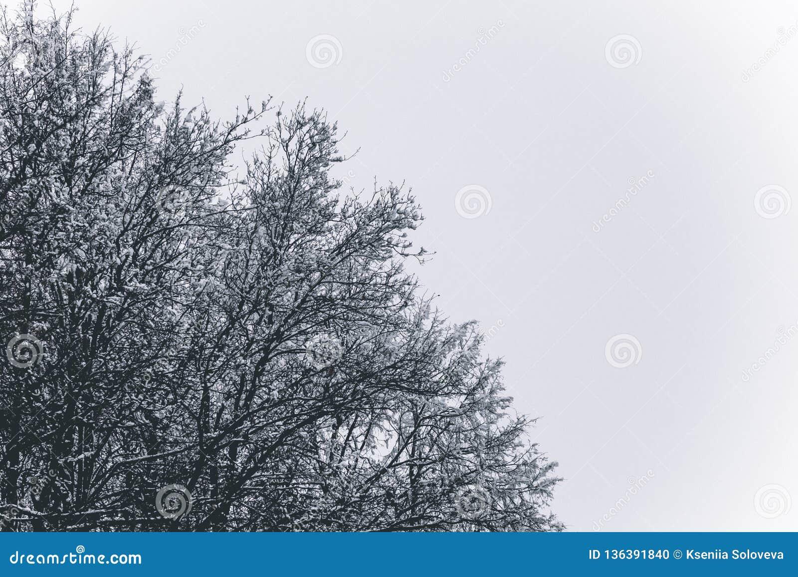 Boomtakken in de sneeuw Sneeuwkronen van bomen De winter in het park, de winter op de bos Mooie wintertijdachtergrond
