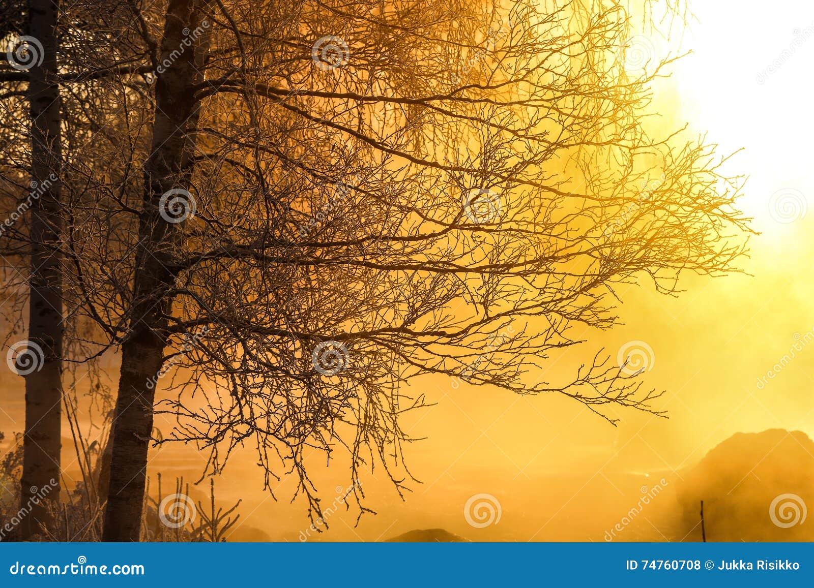 Boomtakken in mooi zonlicht