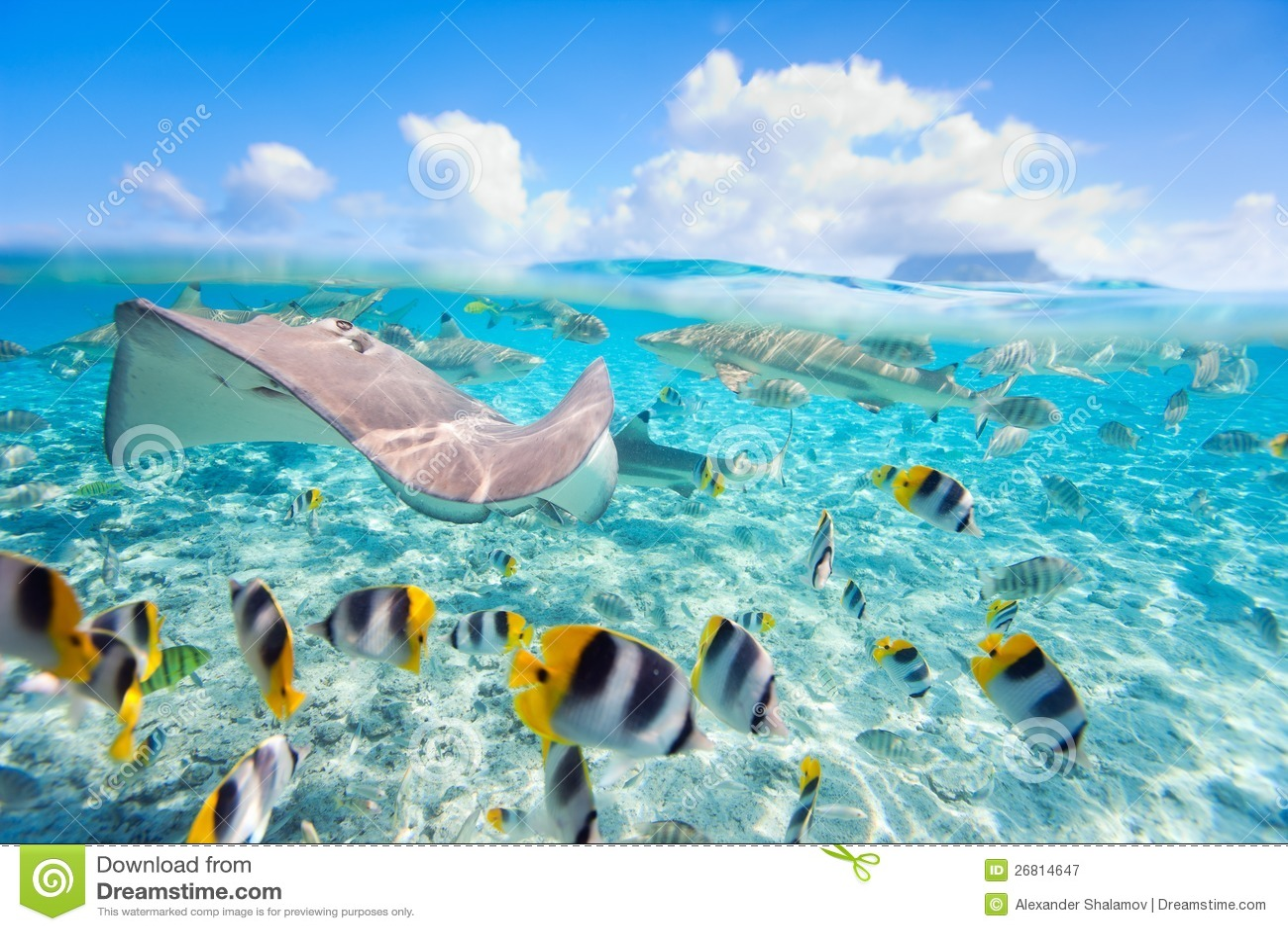 Bora Bora υποβρύχιο