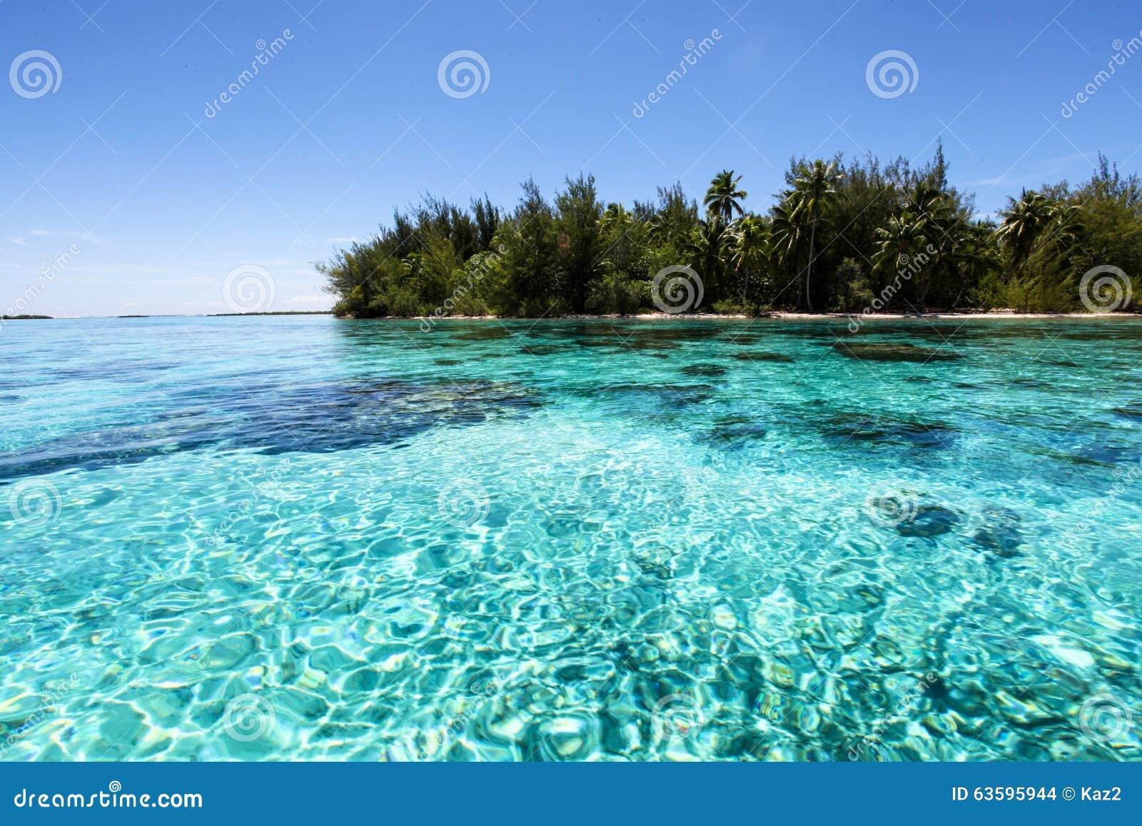 Bora Bora Stock Photo Image Of French Coralreef Trees