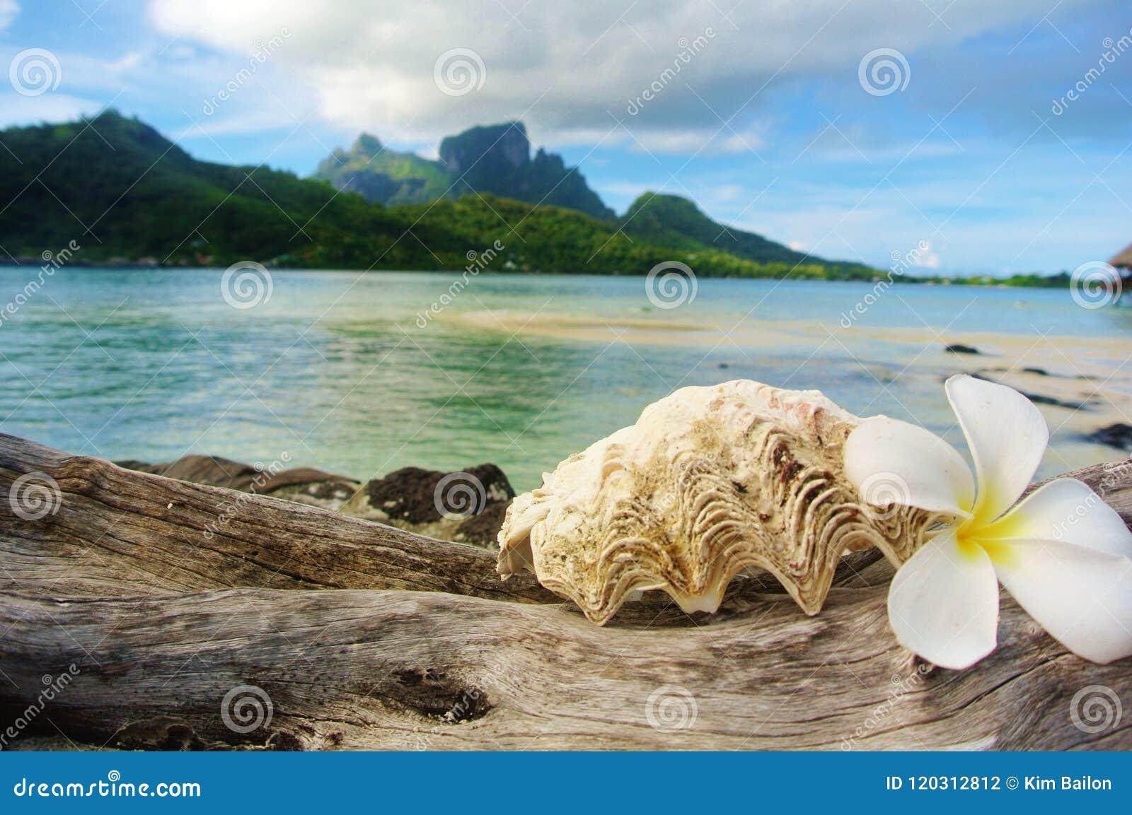 Bora Bora, concha marina y flor con el fondo de la montaña
