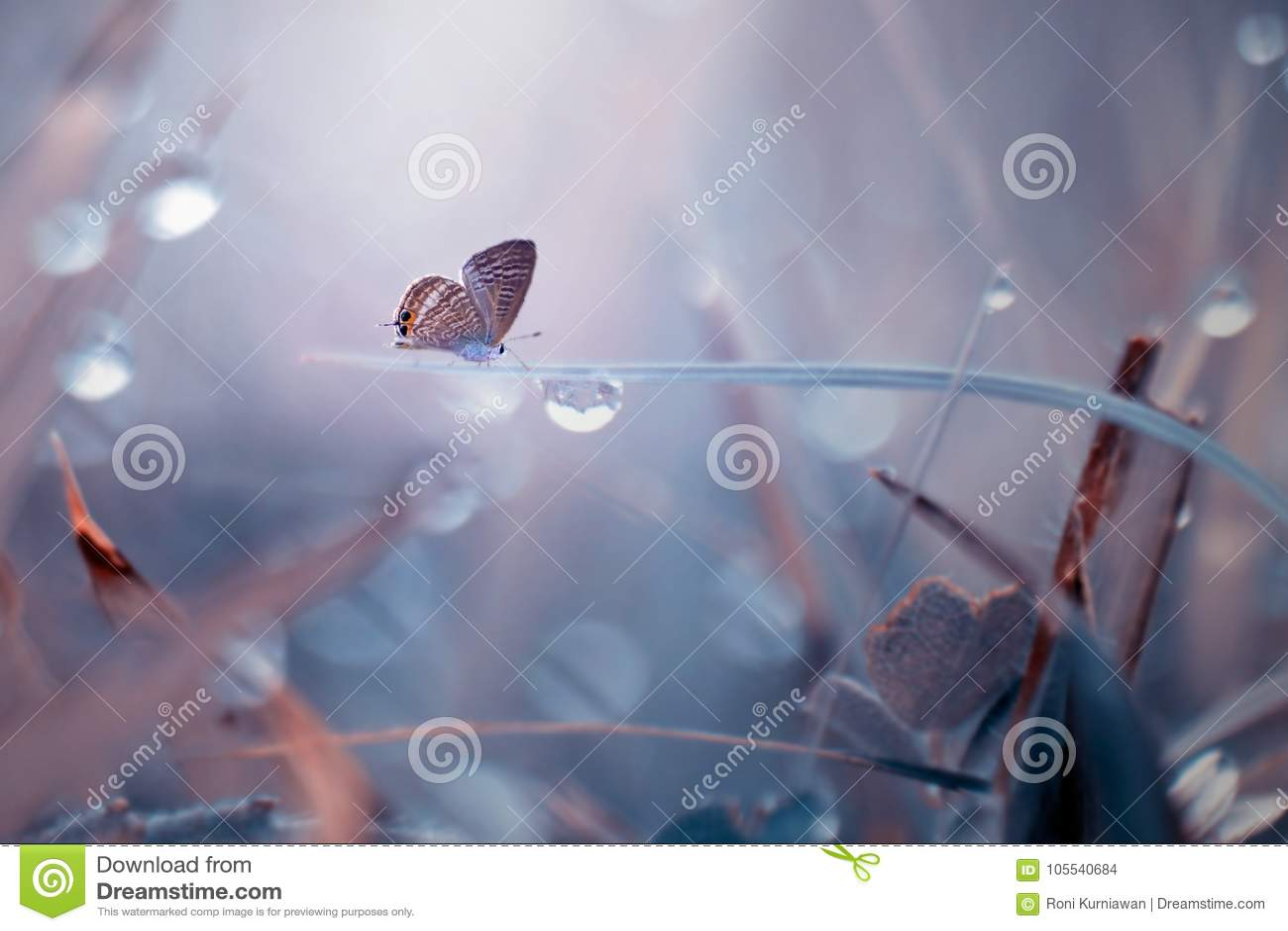 Borboleta, animais, macro, bokeh, inseto, natureza,