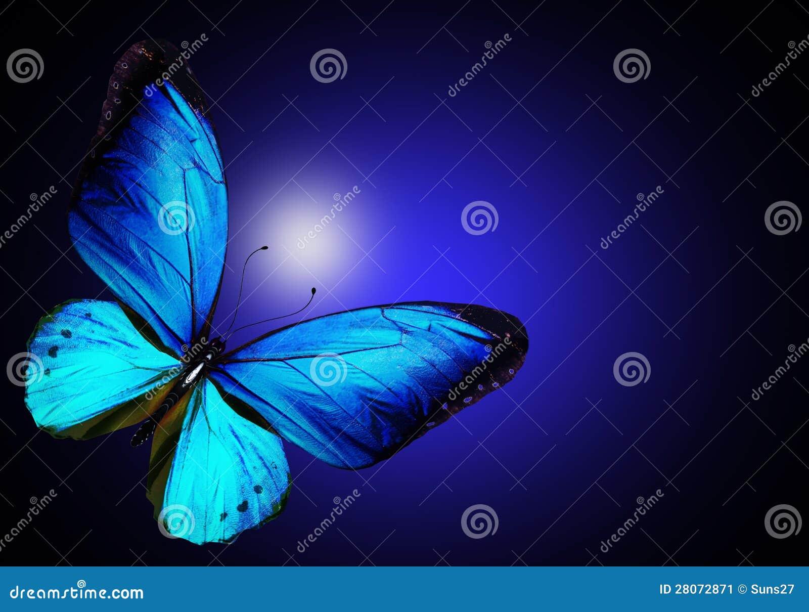 Borboleta azul no fundo azul