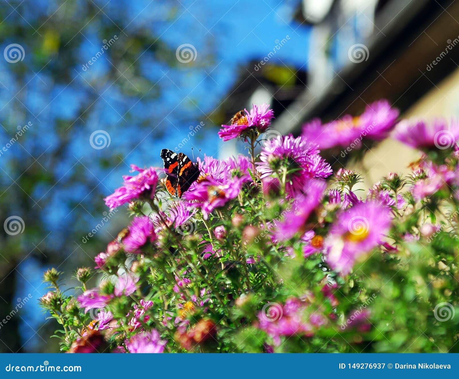 Borboleta bonita da mola da flor do sol da planta da foto do ver?o
