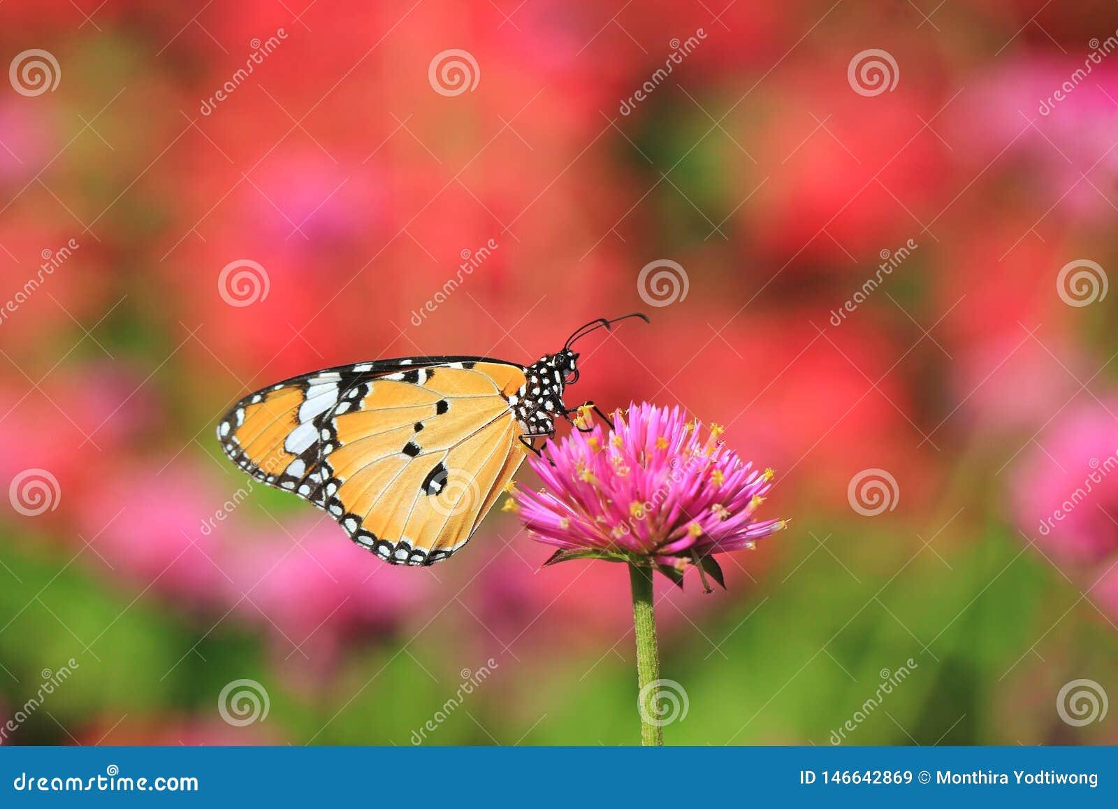 Borboleta bonita em flores no fundo natural