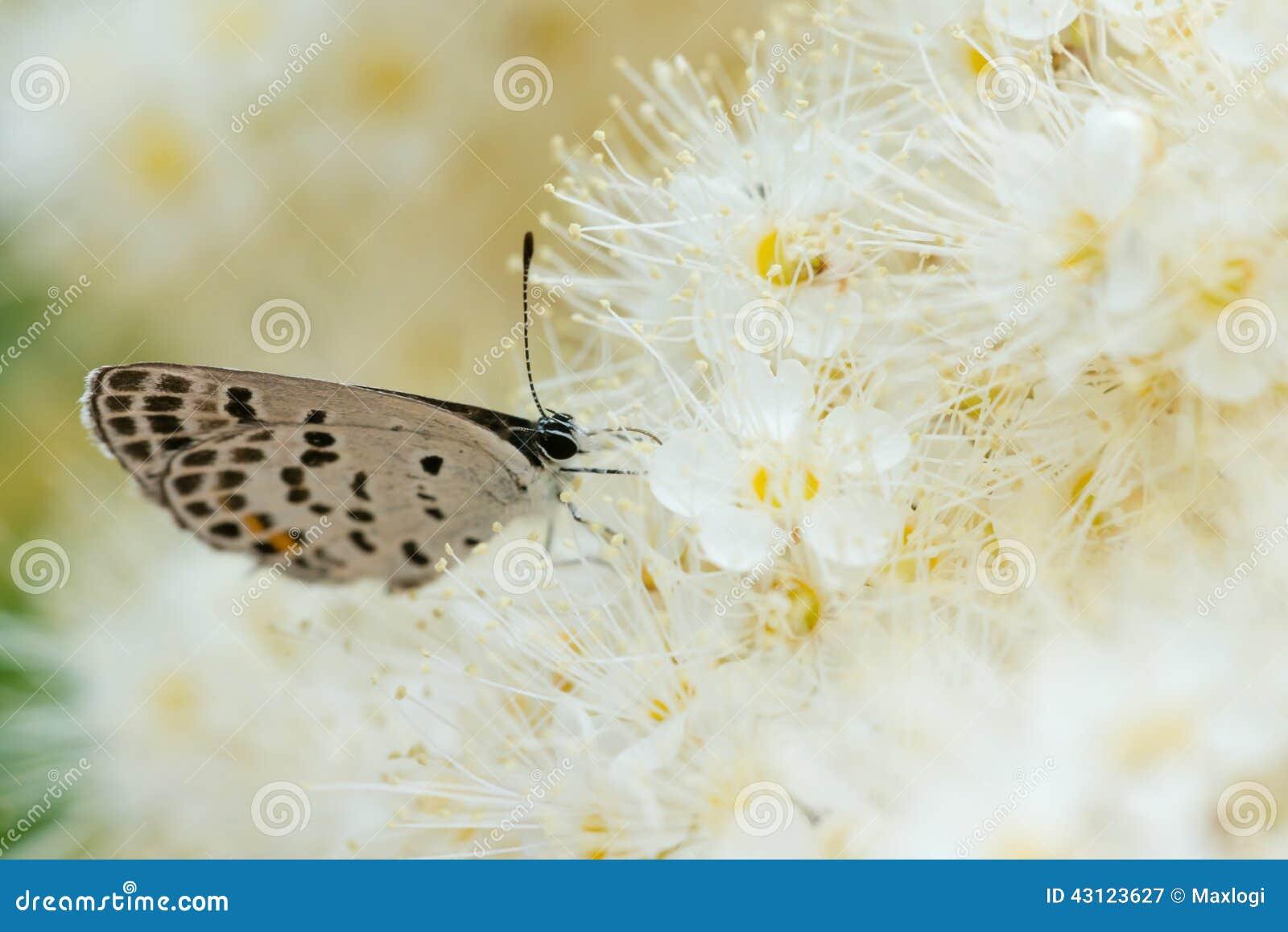 Borboleta com as flores brancas na natureza