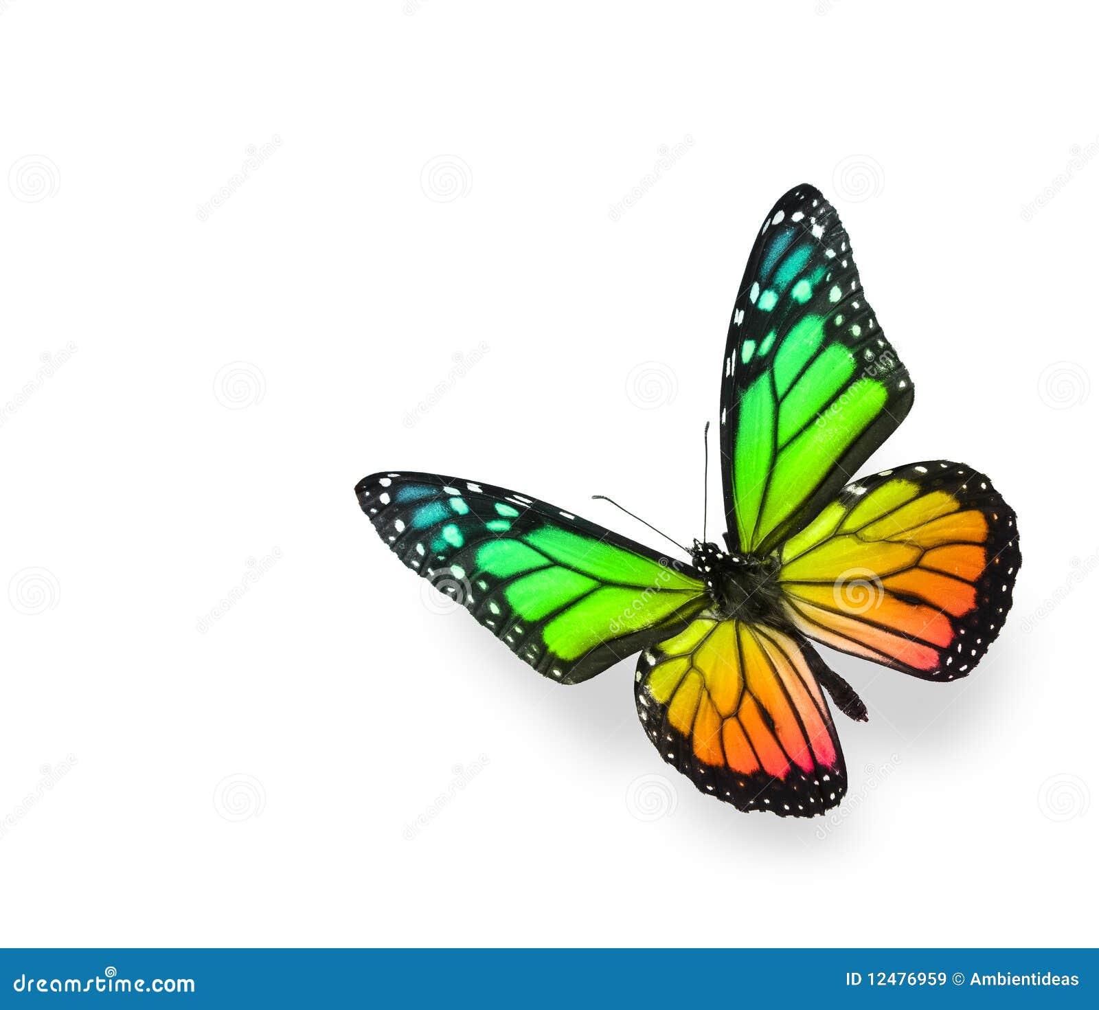 Borboleta da cor do arco-íris