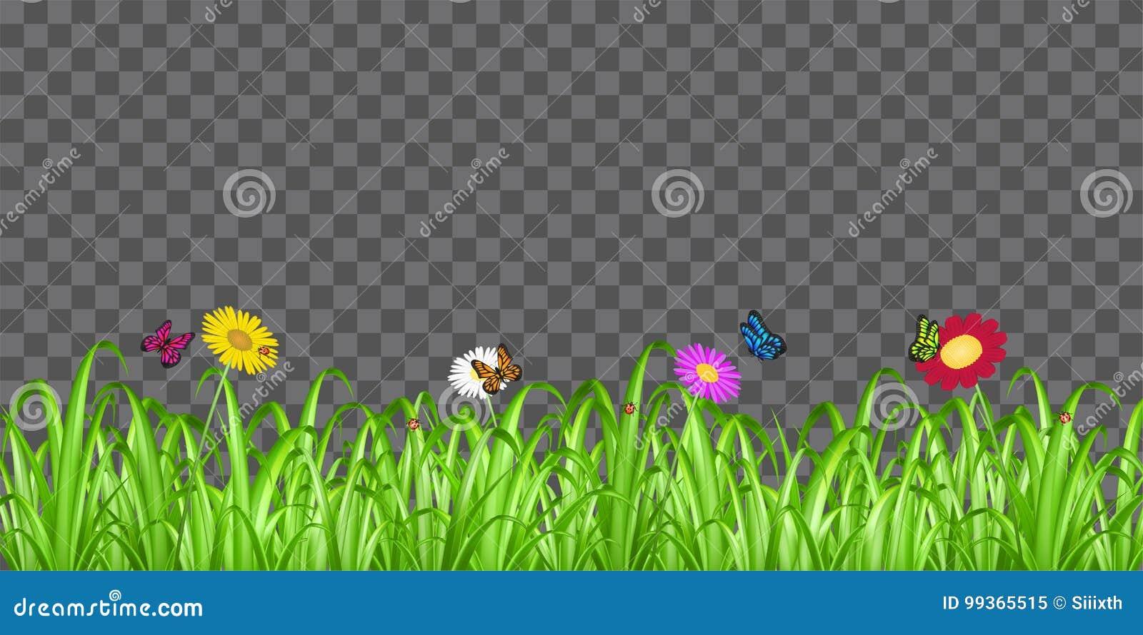 Borboleta Da Flor Da Grama No Fundo Transparente Ilustracao Do Vetor