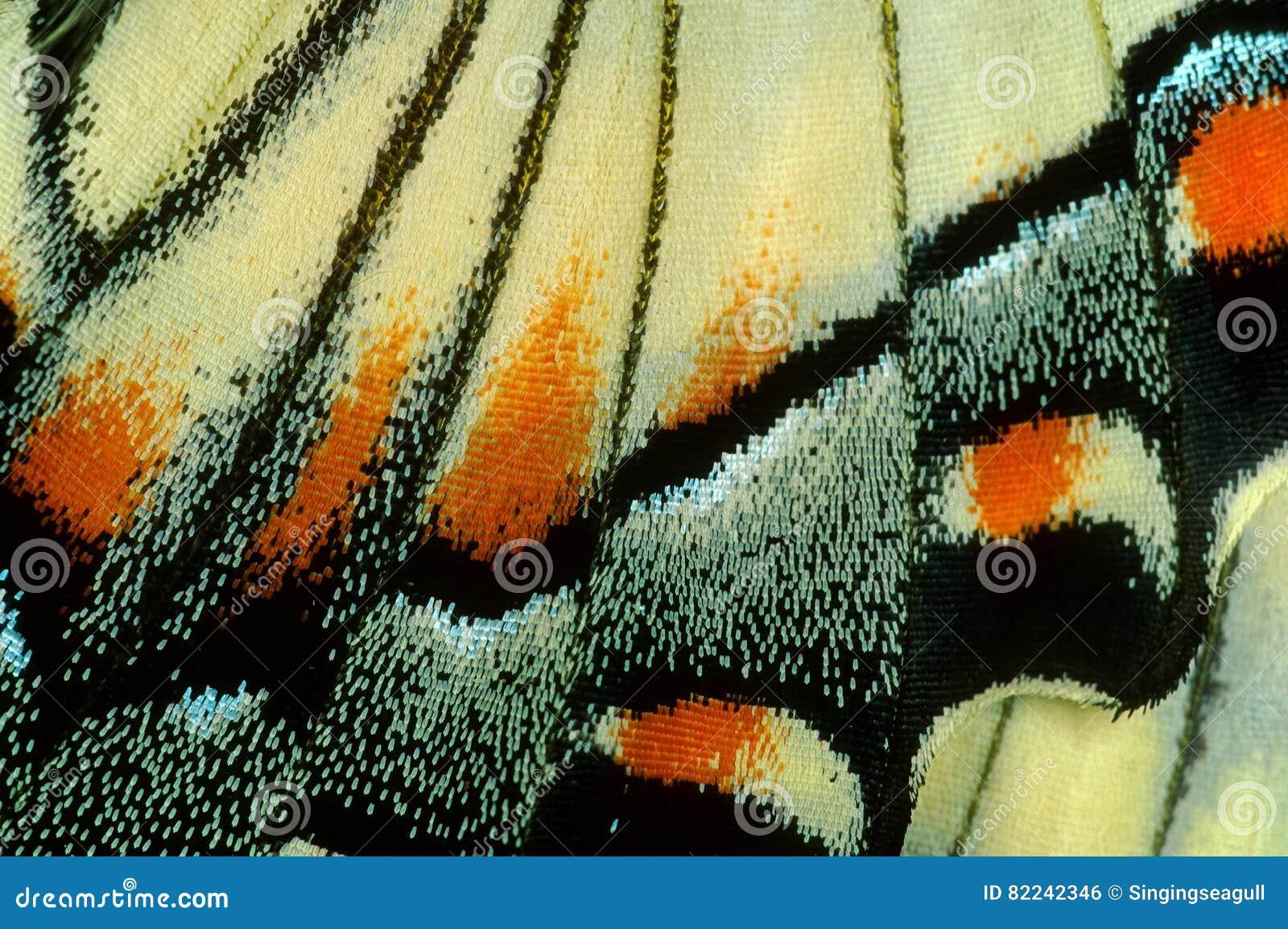 Borboleta de Swallowtail no macro