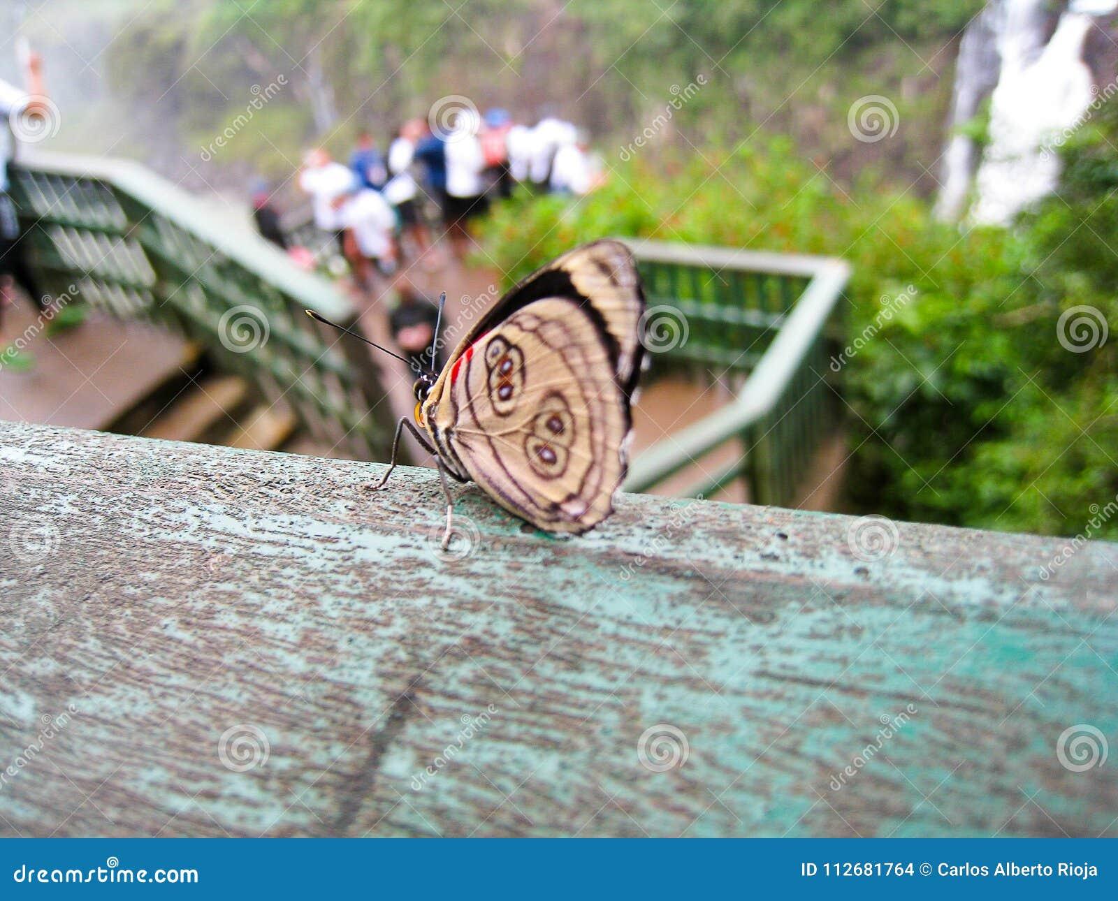 Borboleta em trilhos ao lado das cachoeiras