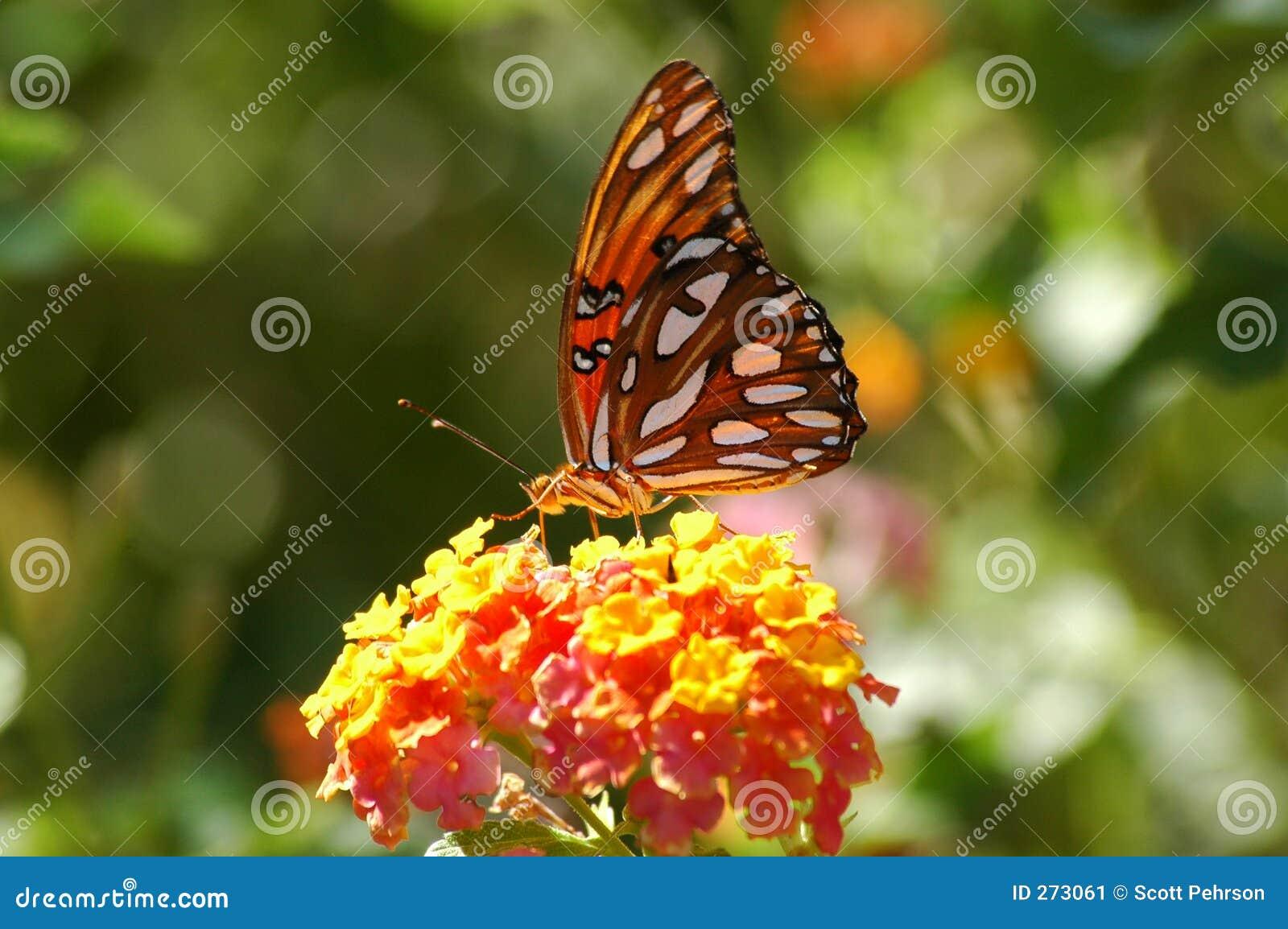 Borboleta empoleirada na flor