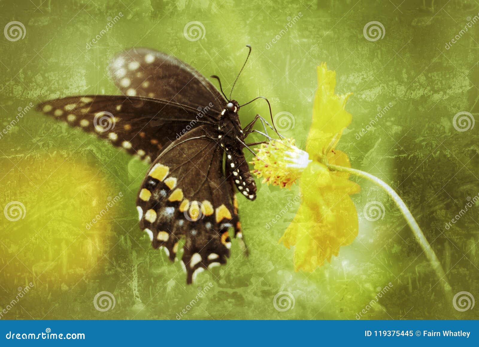 Borboleta preta masculina Antiqued de Swallowtail