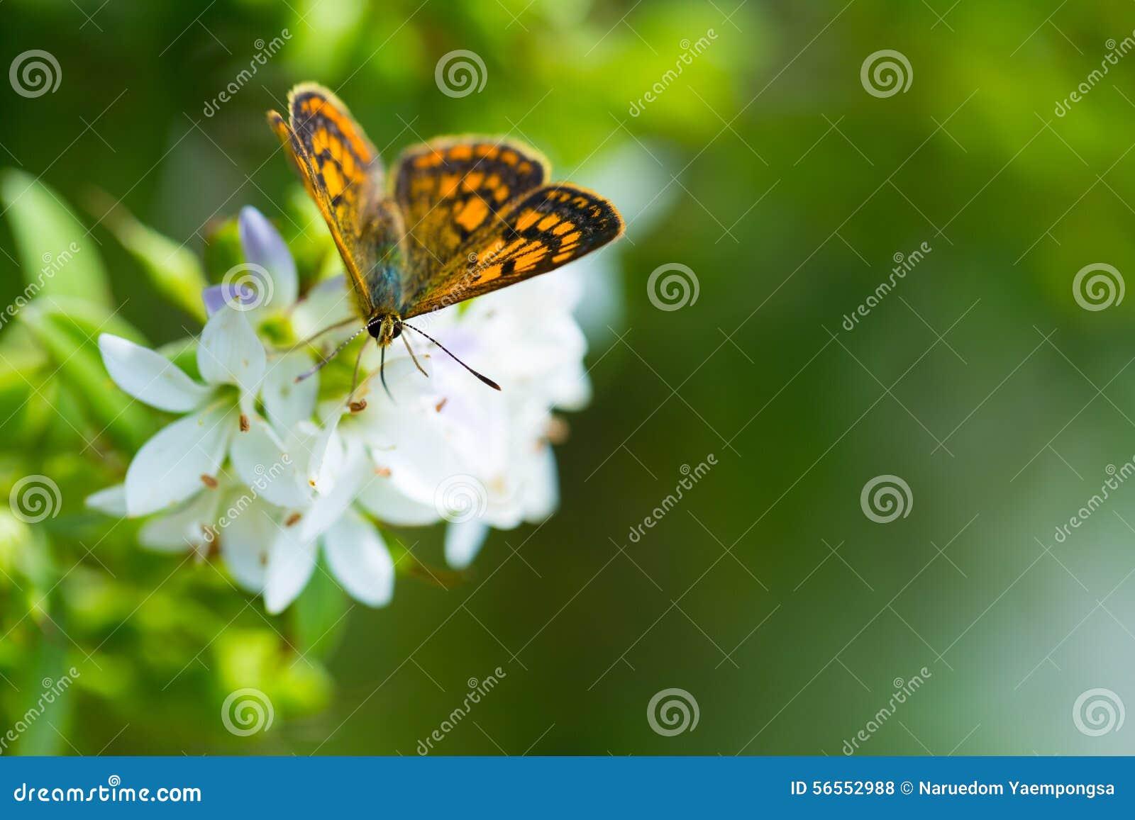 Borboleta que alimenta em wildflowers