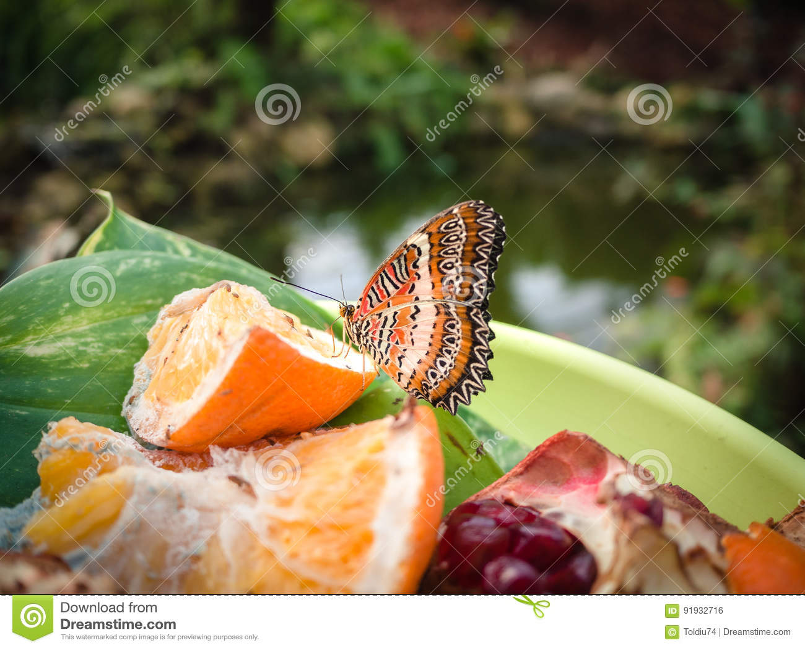 Borboleta que descansa em uma placa do fruto em um jardim botânico