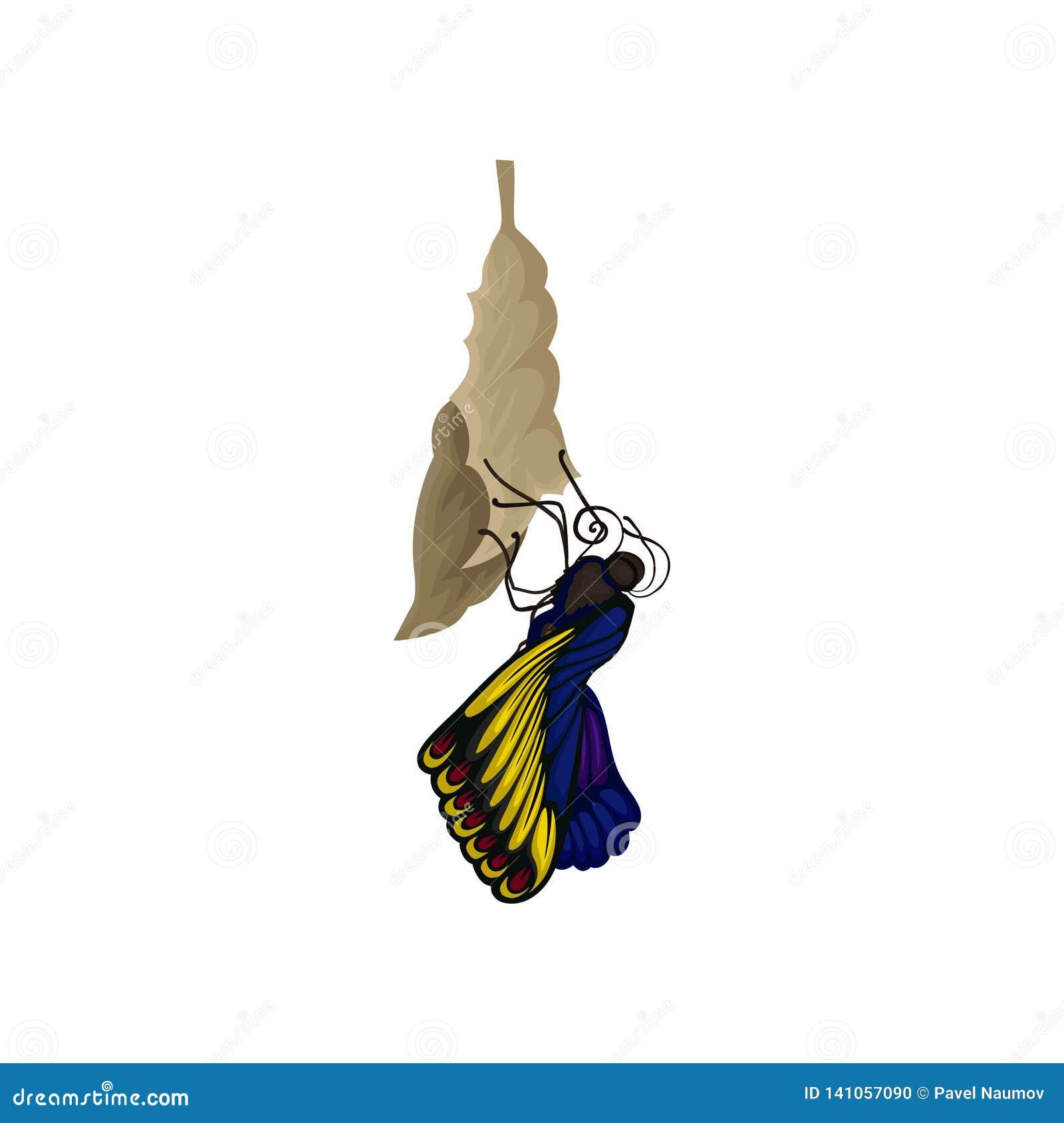 Borboleta recentemente nascida no casulo Inseto de voo bonito com as asas azul-amarelas brilhantes Tema da natureza Ícone liso do