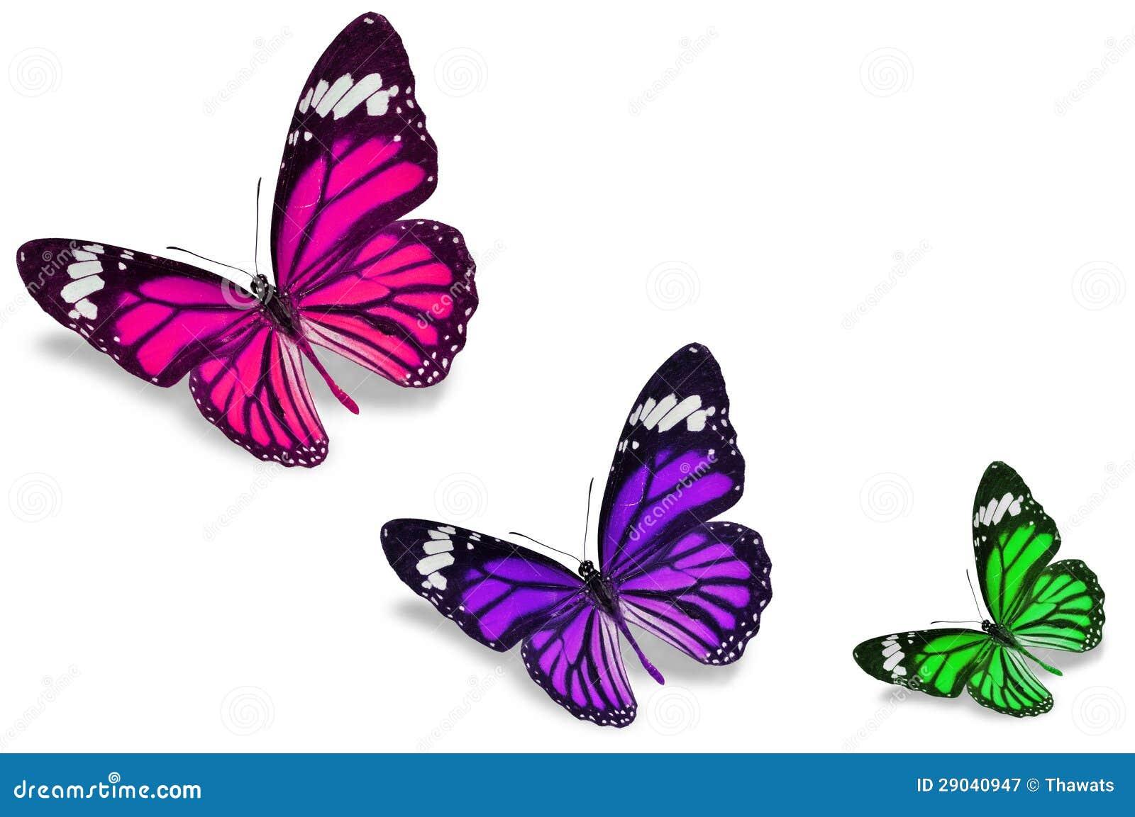 Borboletas Coloridas Ilustração Stock Ilustração De