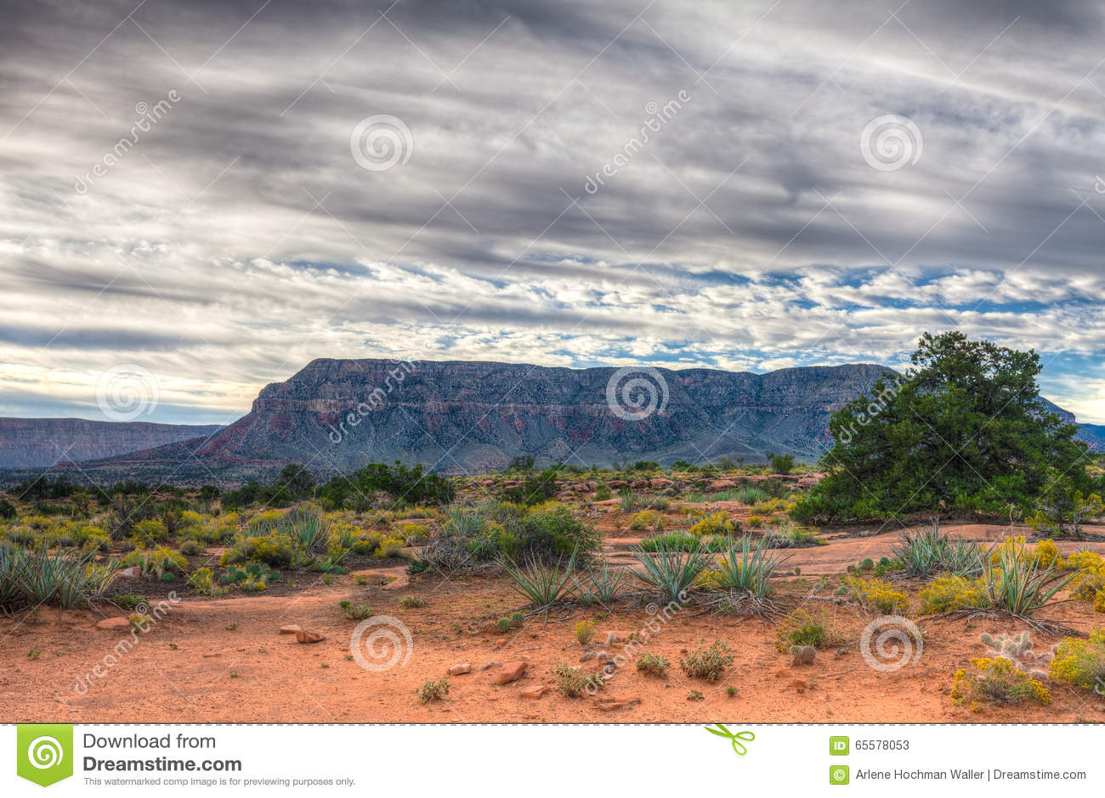 Borda-Toroweep nacional do parque-n da garganta AZ-grande