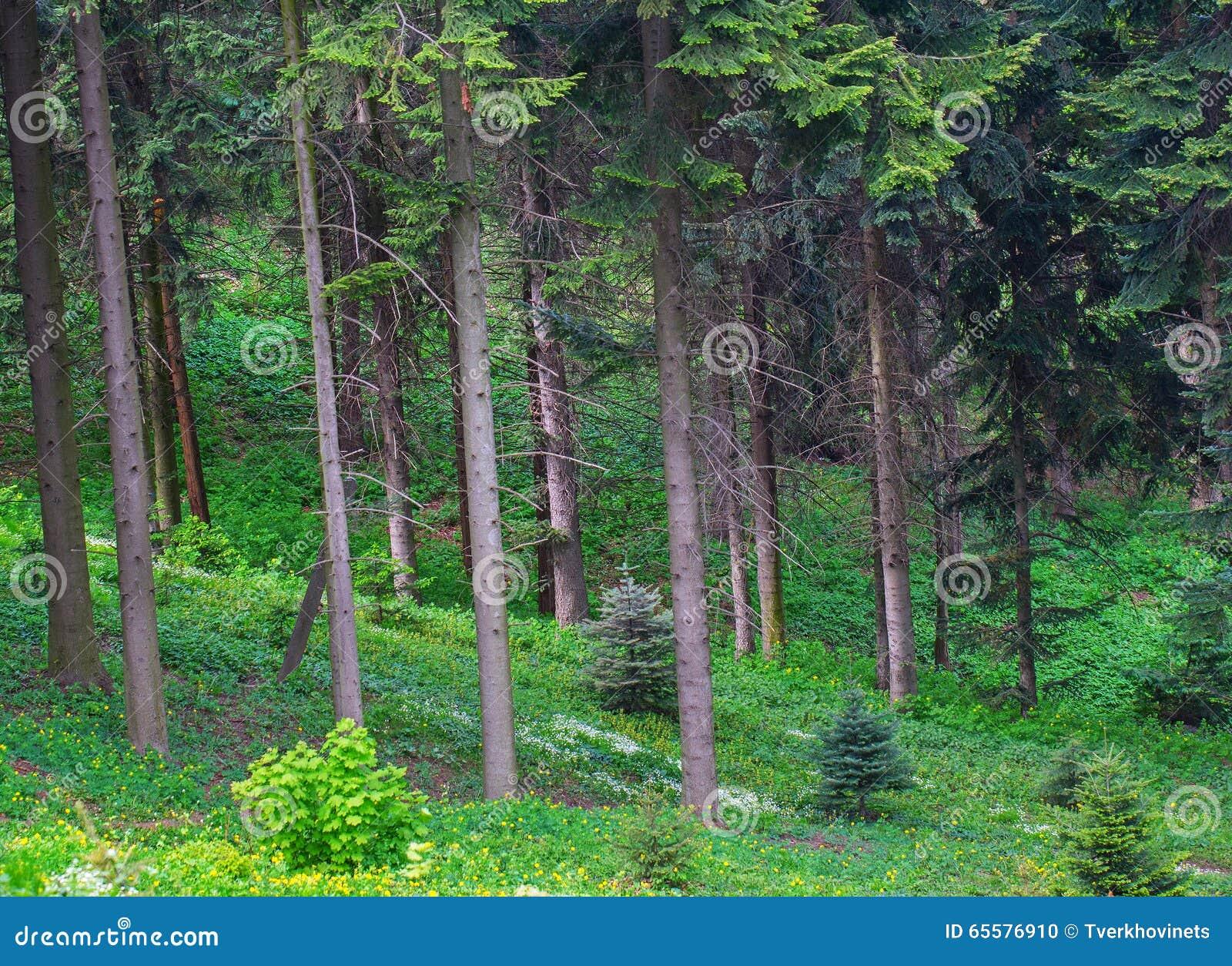 Borda verde da floresta