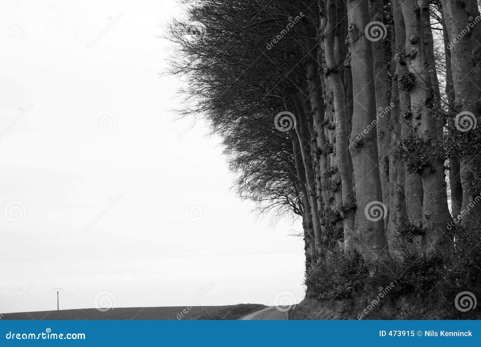 Borde del bosque