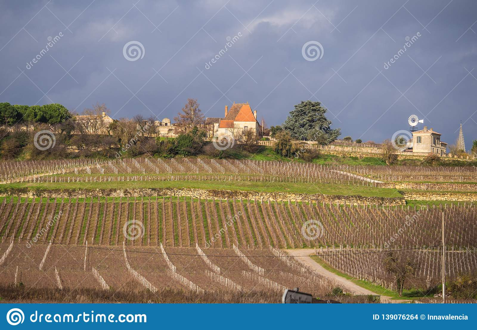 Bordeaux vineyards. Vineyards and hills in autumn.