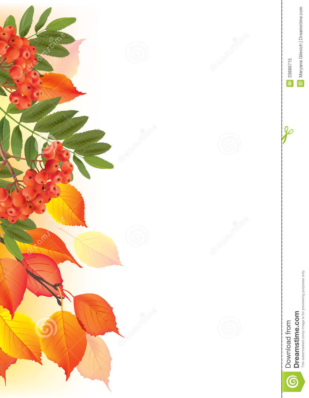 border of autumn leaves and rowan stock vector illustration of plant  harvest 33889715 Thanksgiving Day Clip Art free thanksgiving clipart borders