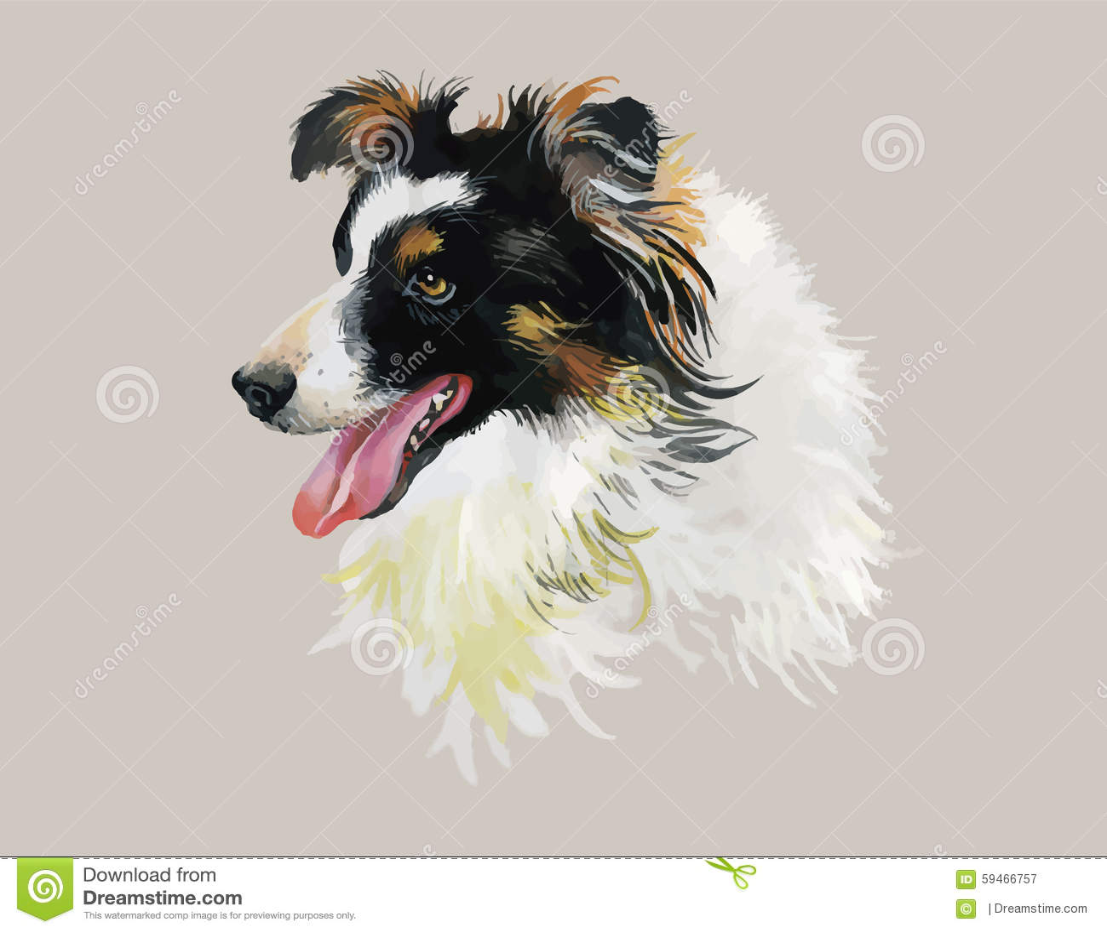 border collie animal dog watercolor illustration on white