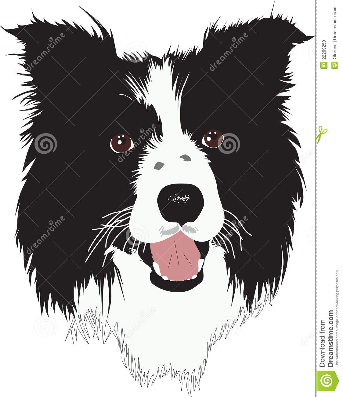 Border Collie Dog Illustration Royalty Free Stock Images Image