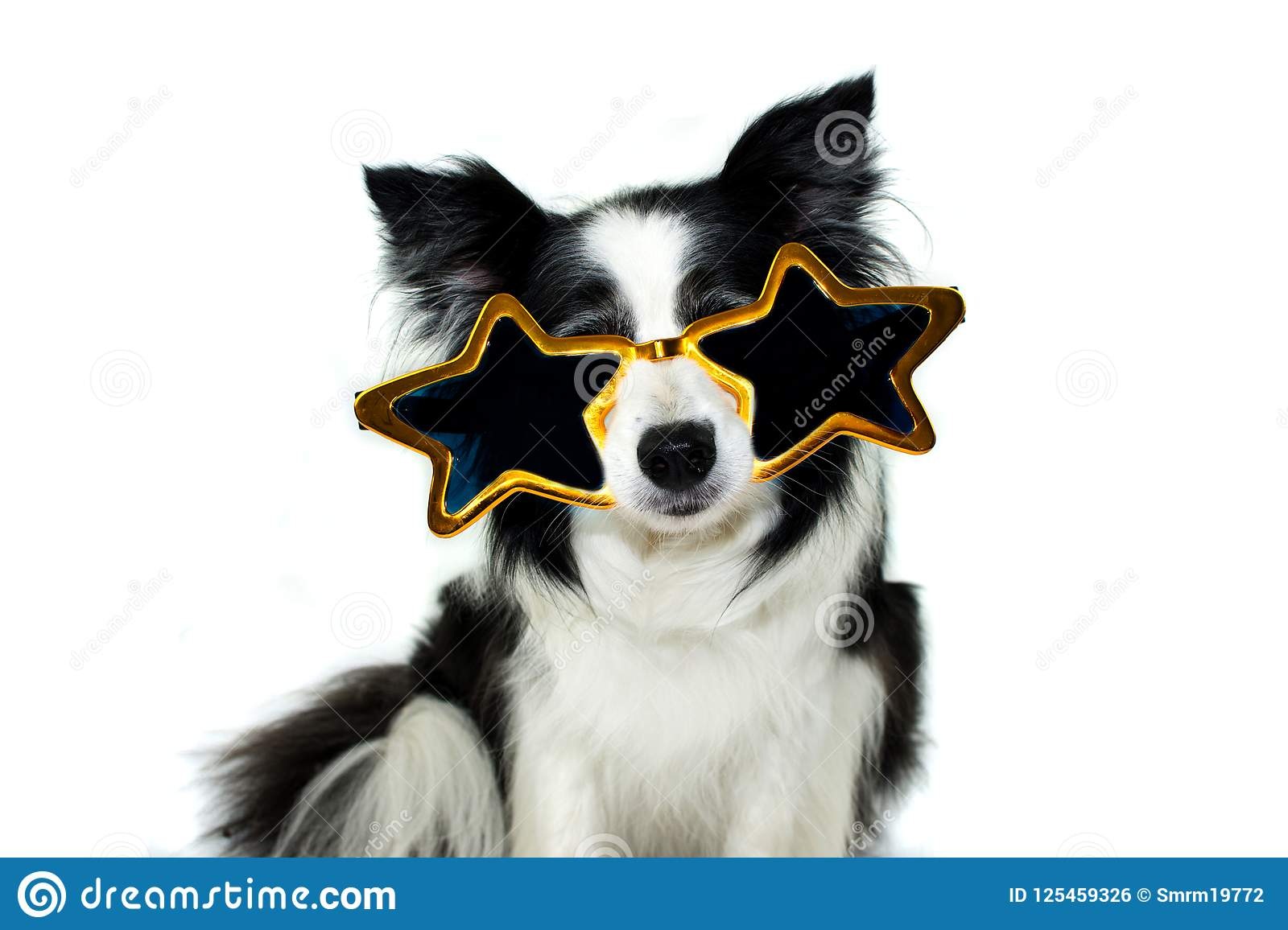 border collie dog wearing big party glasses for halloween new y