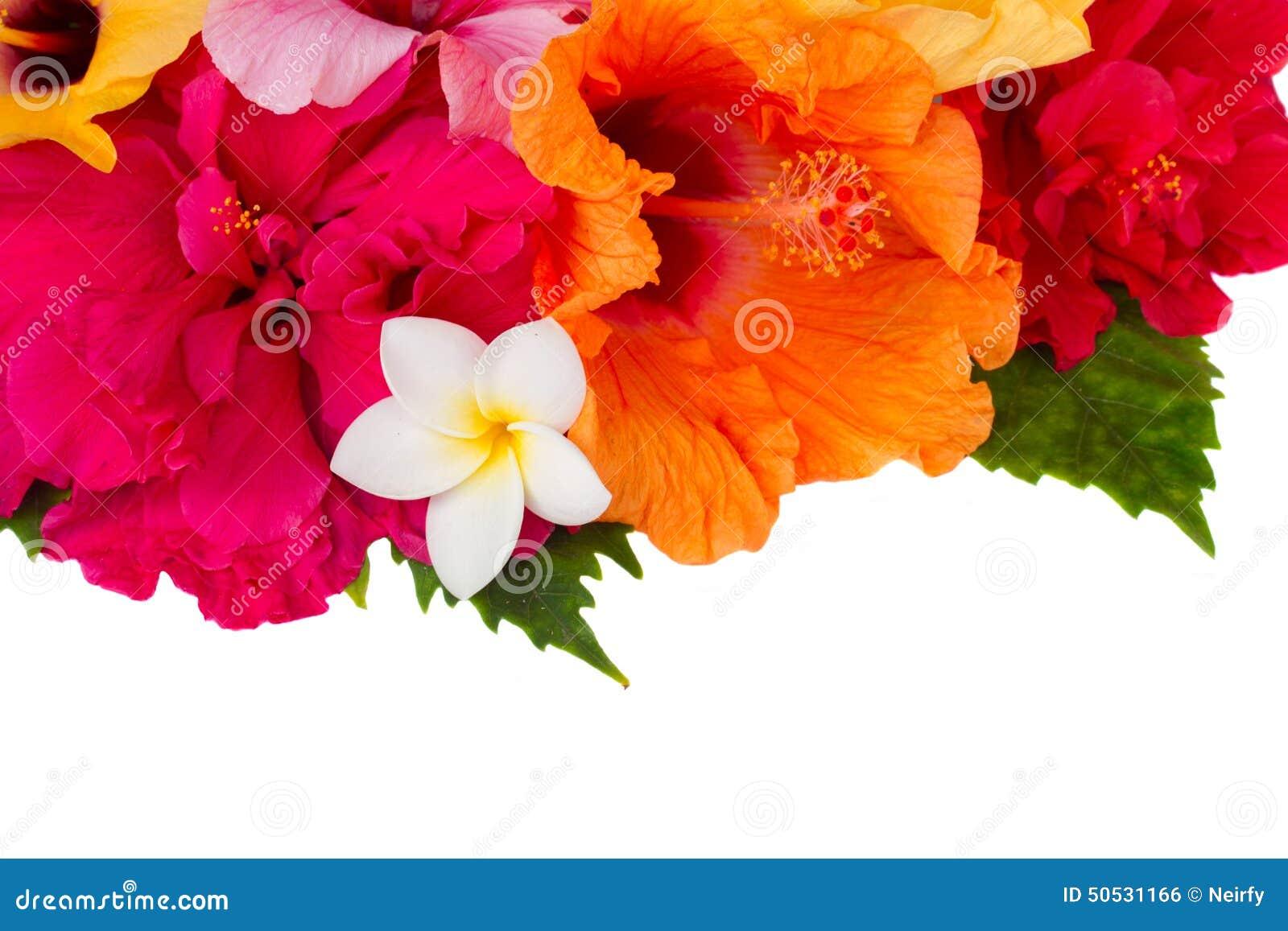 Border Of Colorful Hibiscus Flowers Stock Photo Image Of Hawaiian