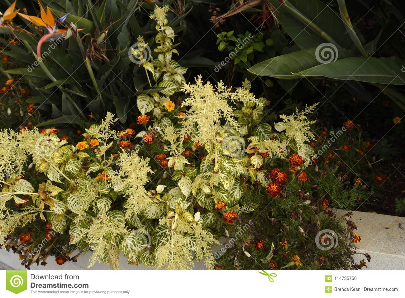 Border Foliage And Flowers In Garden In Funchal On The Island Of ...