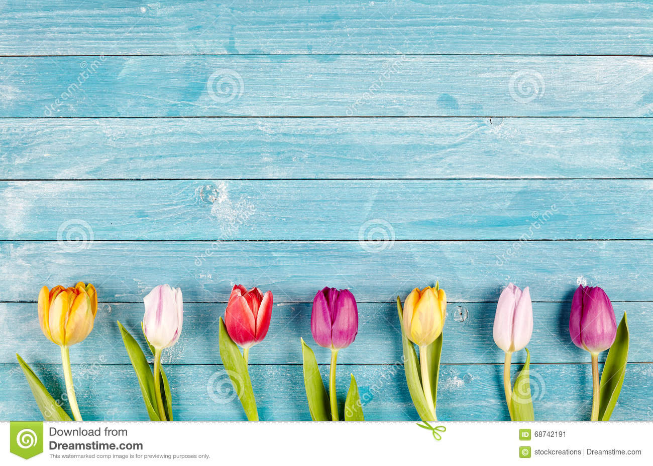 Border of fresh multicolored spring tulips