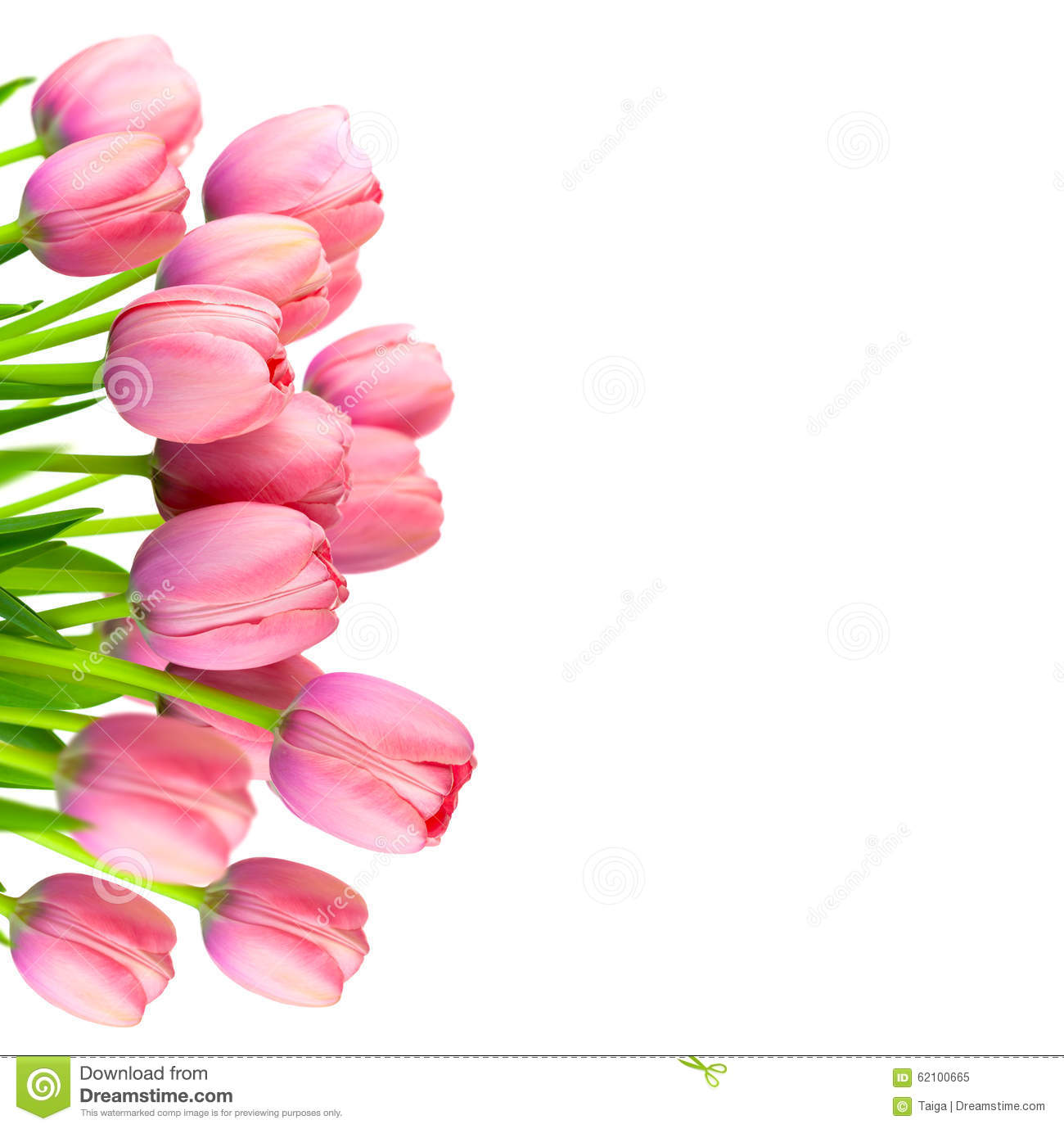 Border Of Gentle Pink Tulips Fresh Flowers On White Stock Image