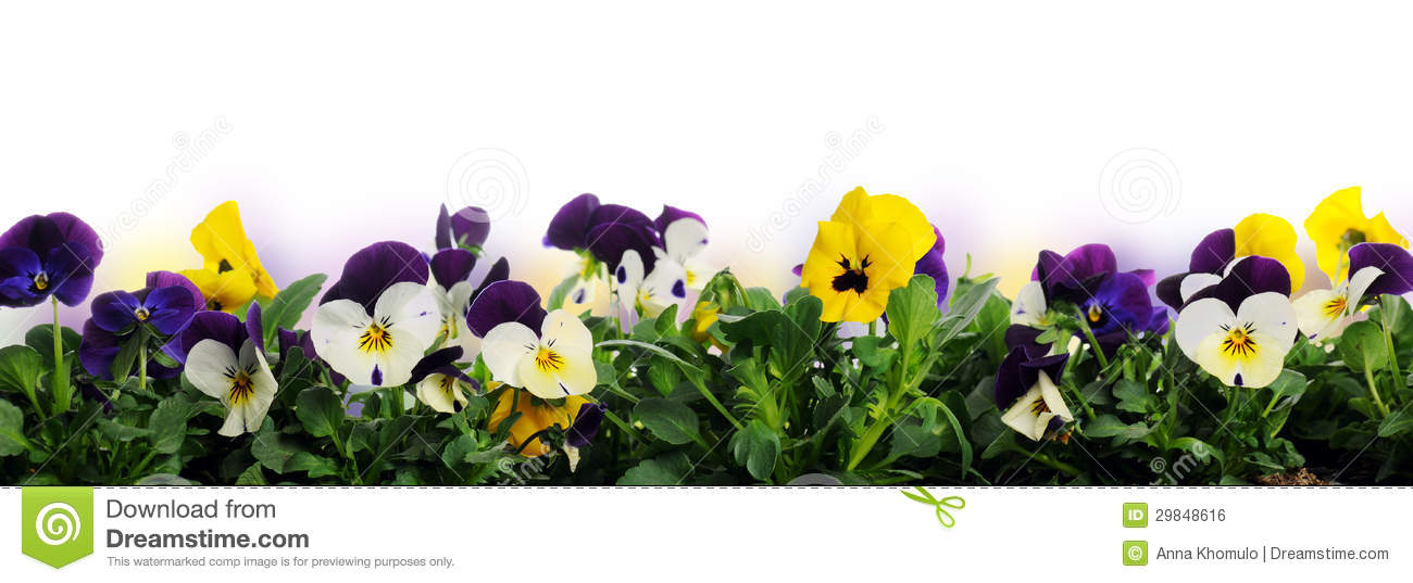 Red flowers border vector stock image - Border Of Pansies Royalty Free Stock Image Image 29848616