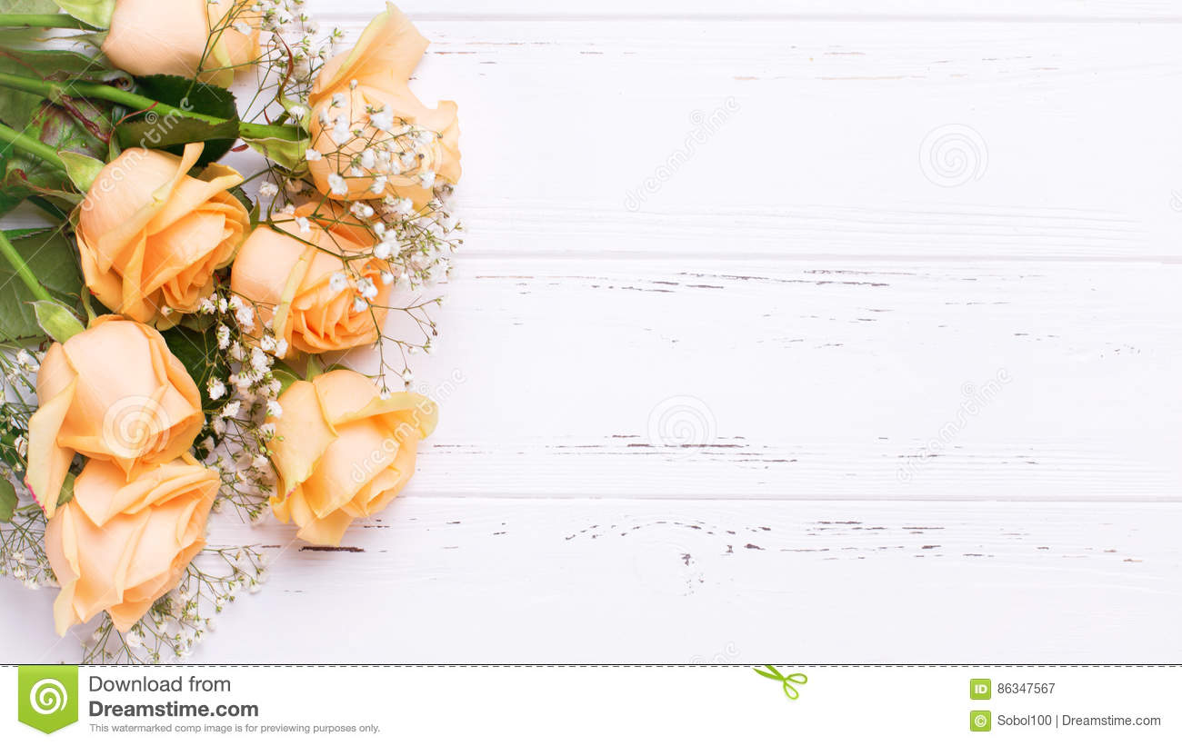 5 709 peach roses photos free royalty free stock photos from dreamstime dreamstime com
