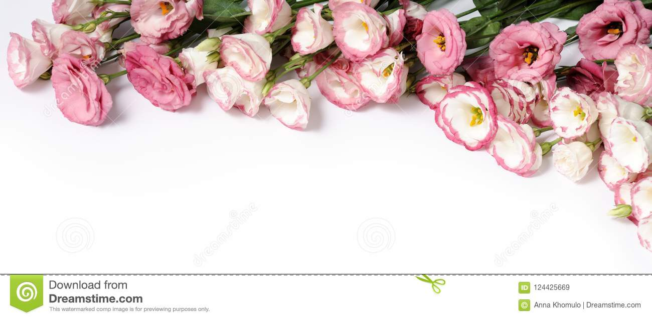 Border Of Pink Flowers Stock Image Image Of Floral 124425669