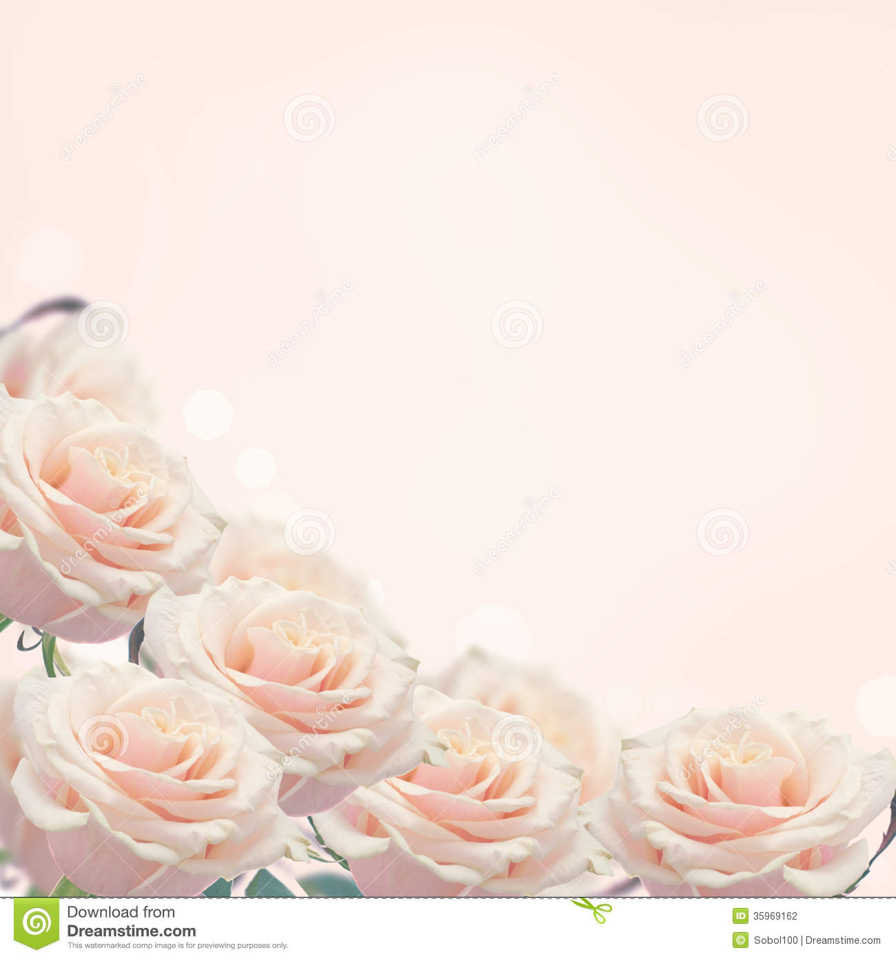 Border From Rfesh Roses Stock Photography Image 35969162