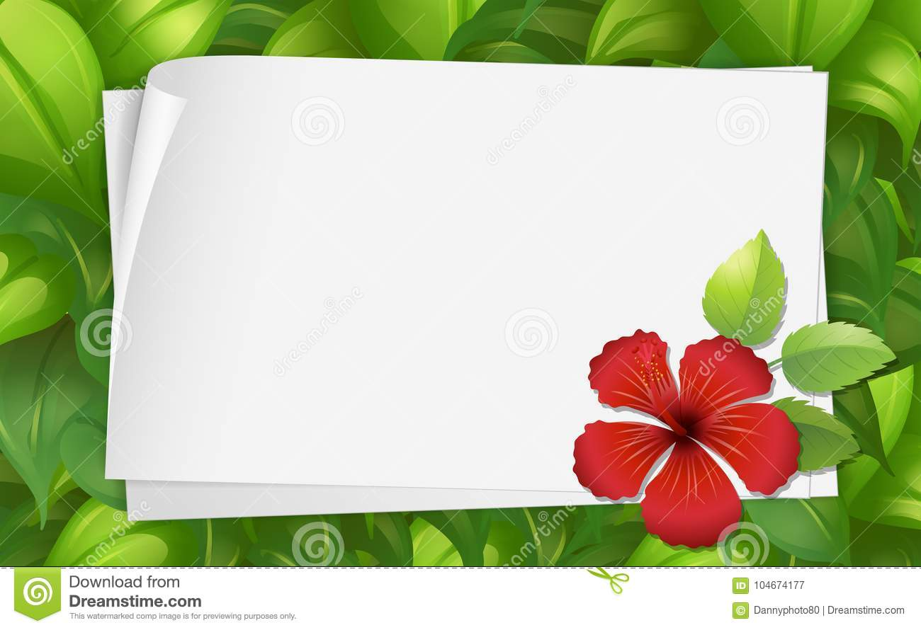 Border Template With Hibiscus Flower Stock Vector Illustration Of