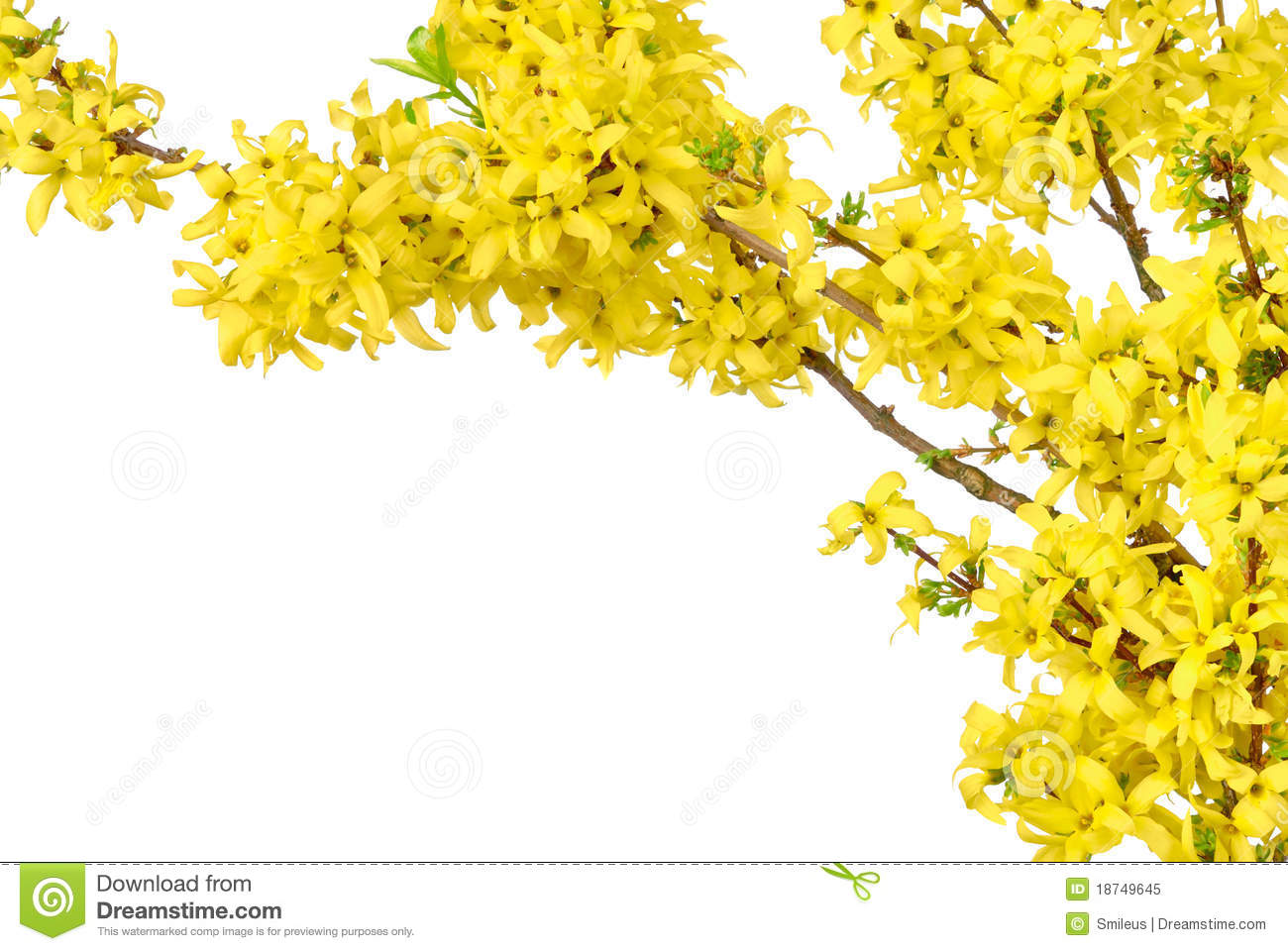 Border Of Yellow Spring Blossoms Stock Image Image 18749645