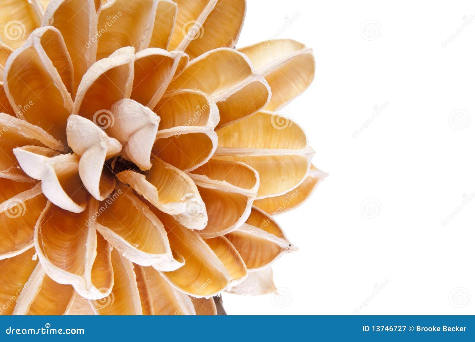 Bordo del fiore di carta