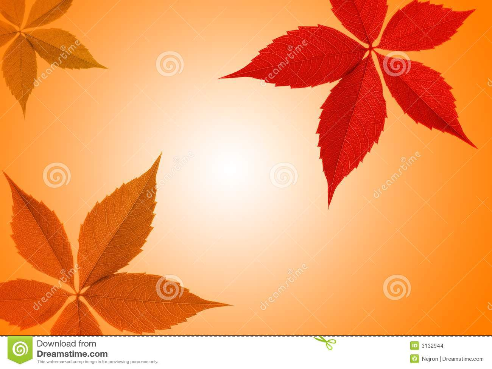 Bordo del foglio di autunno