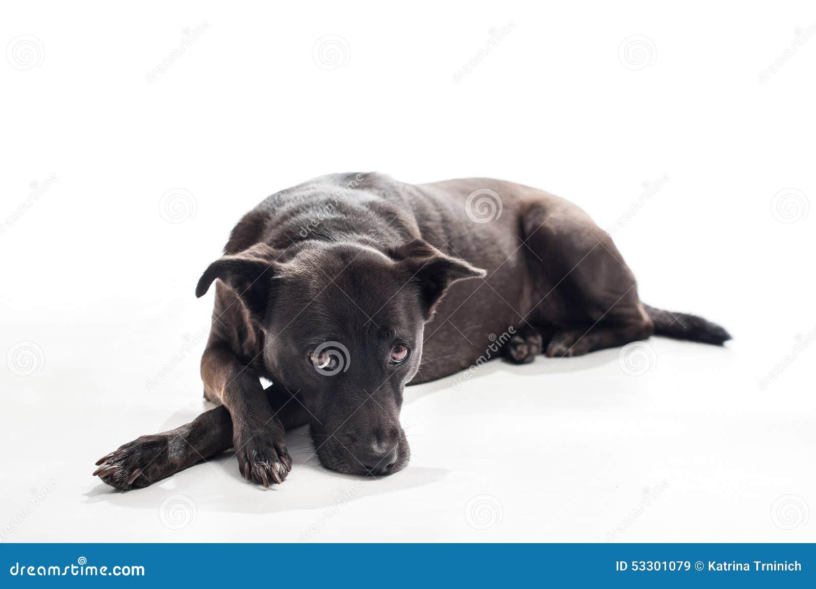 Black dog lying on back - photo#3