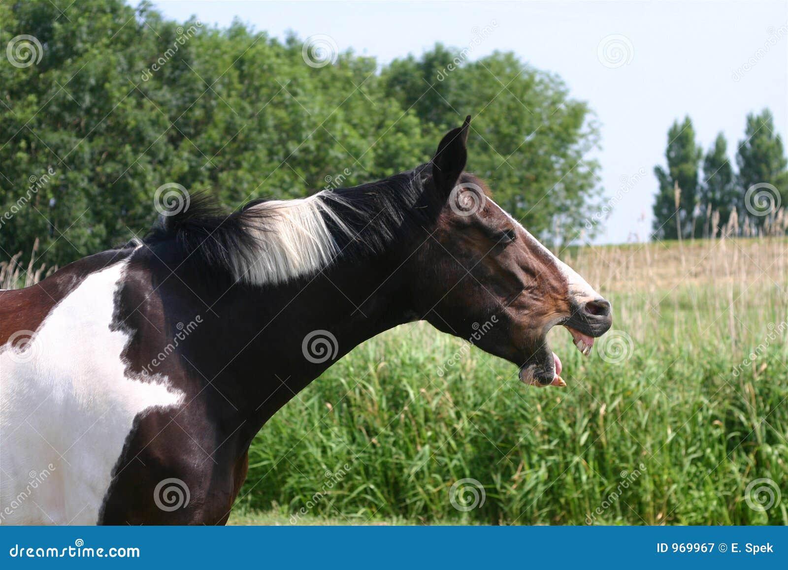 Bored horse