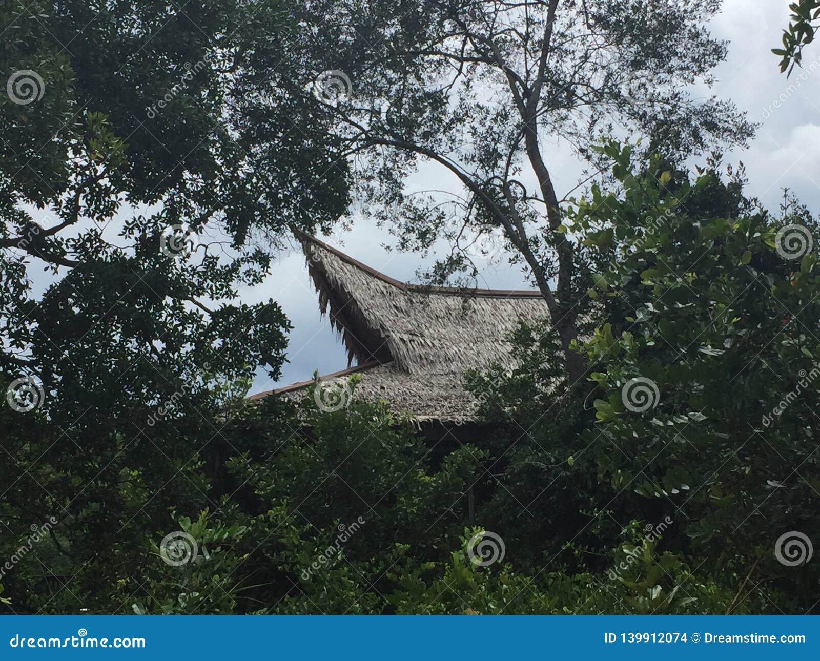 Borneo härmar att spela i en trädfrunch