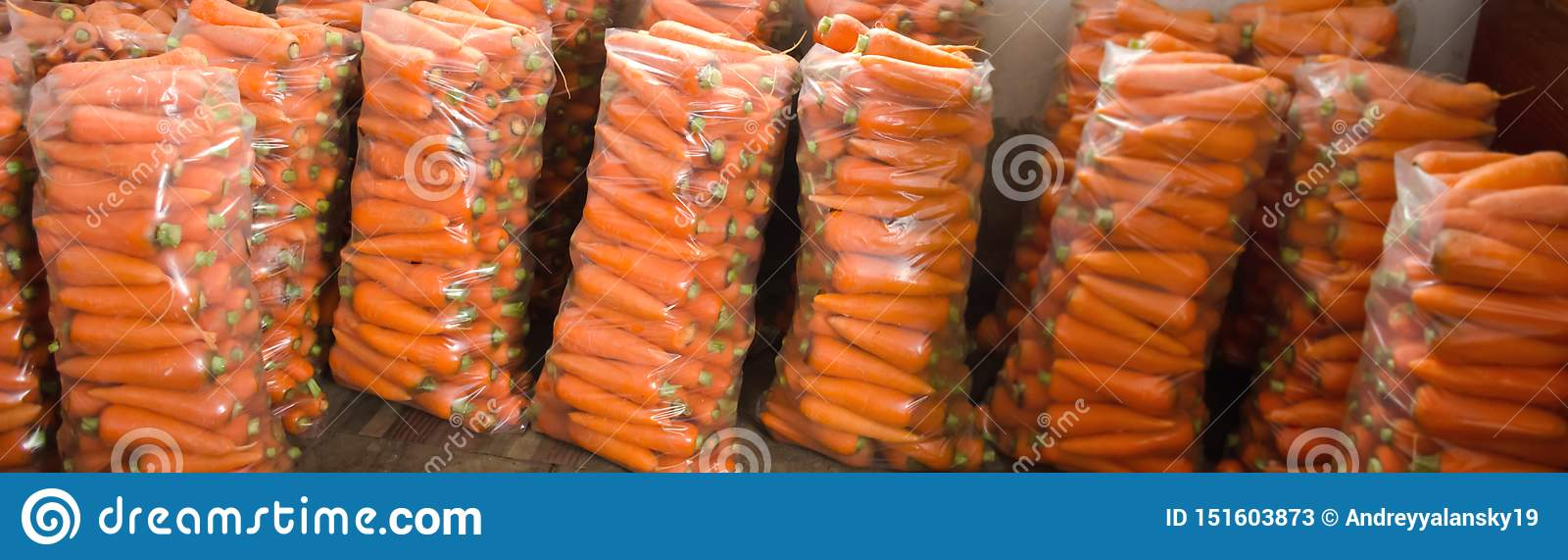 Borse con la giovane carota fresca per la vendita Appena raccolto Verdure organiche crescenti Agricoltura e coltivare L Ucraina,