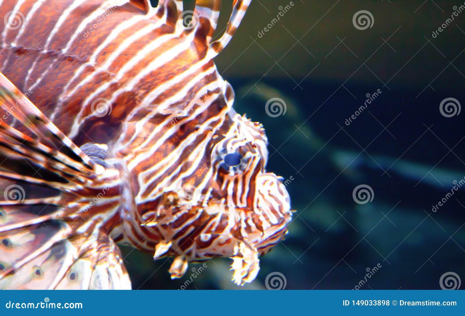 Bortgång Lion Fish